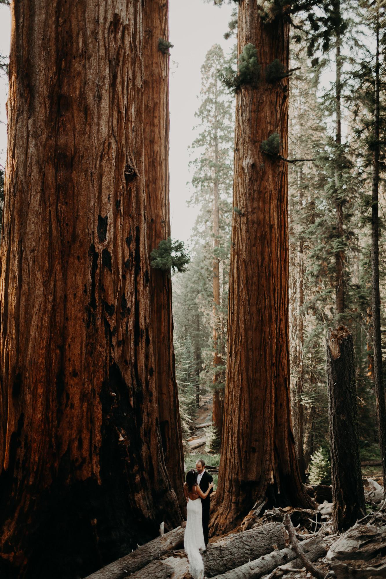 sequoia national park elopement-37.jpg
