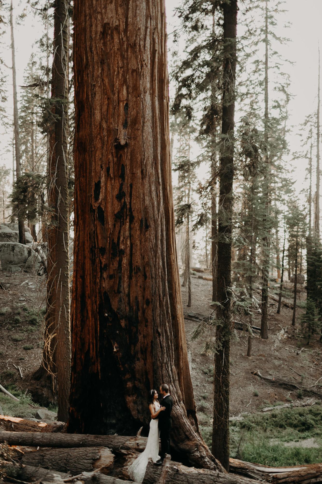 sequoia national park elopement-39.jpg