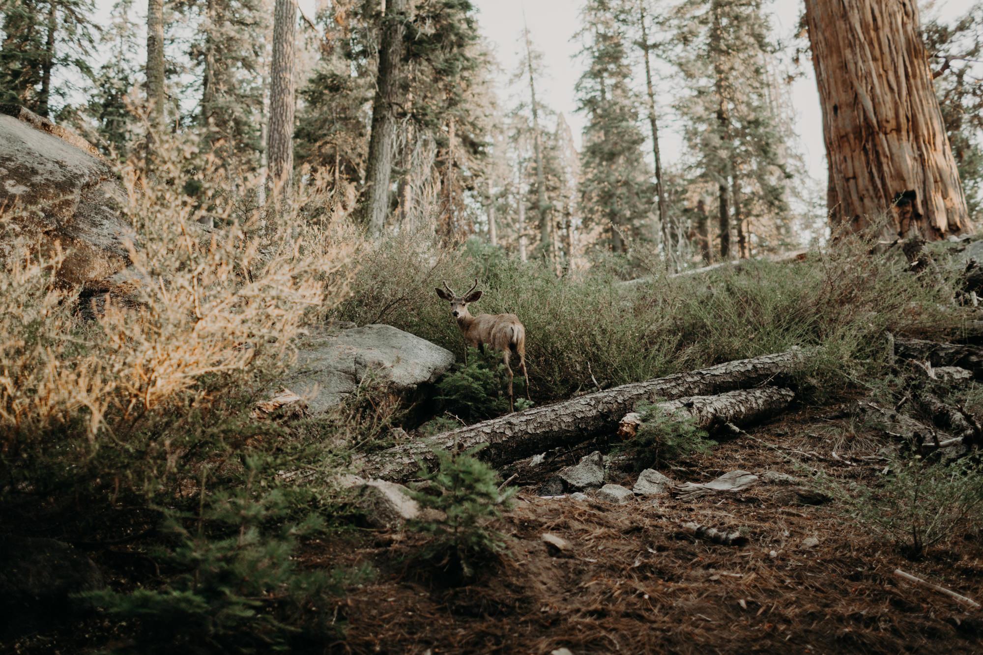 sequoia national park elopement-58.jpg