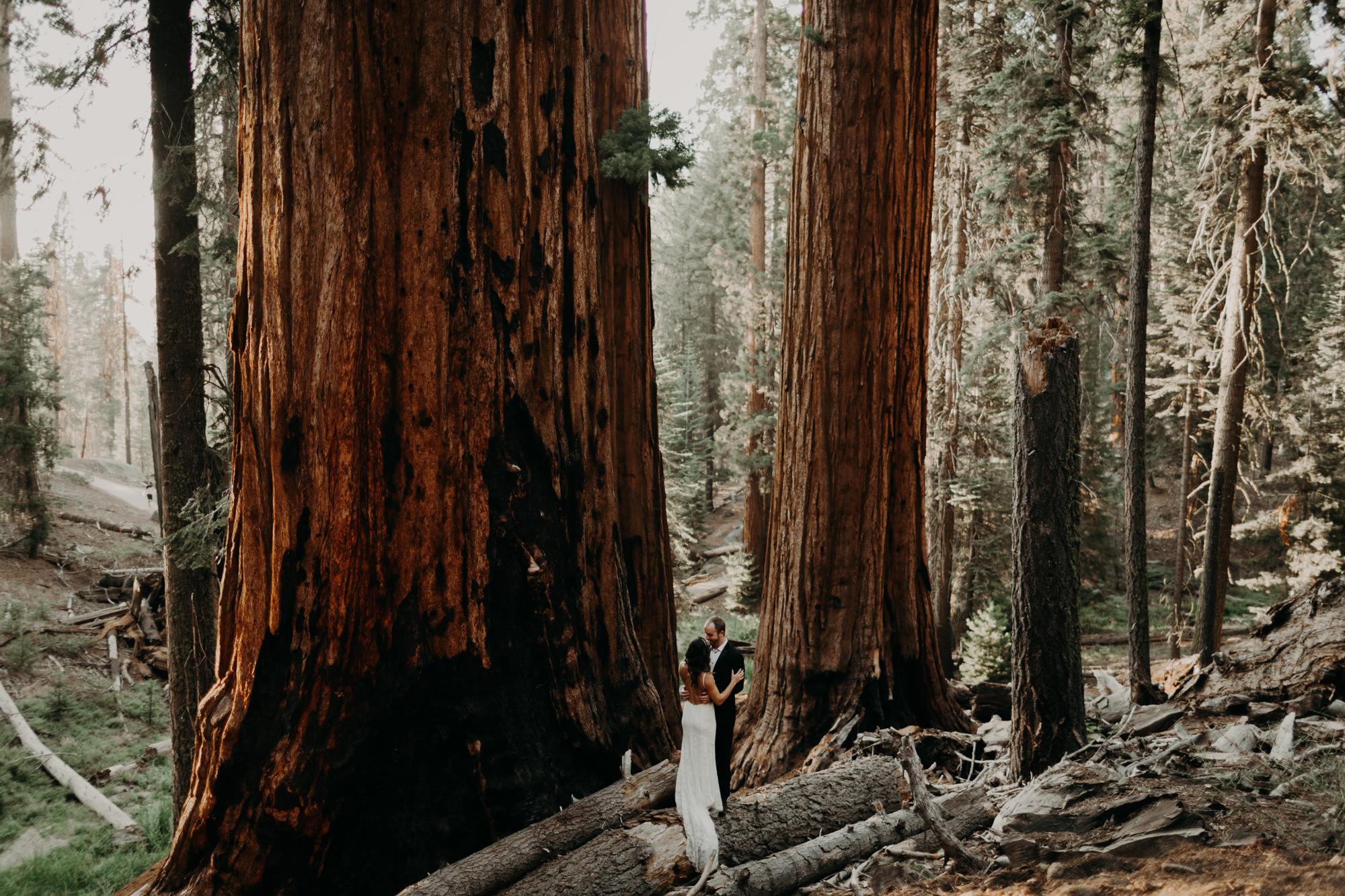 sequoia national park elopement-38.jpg