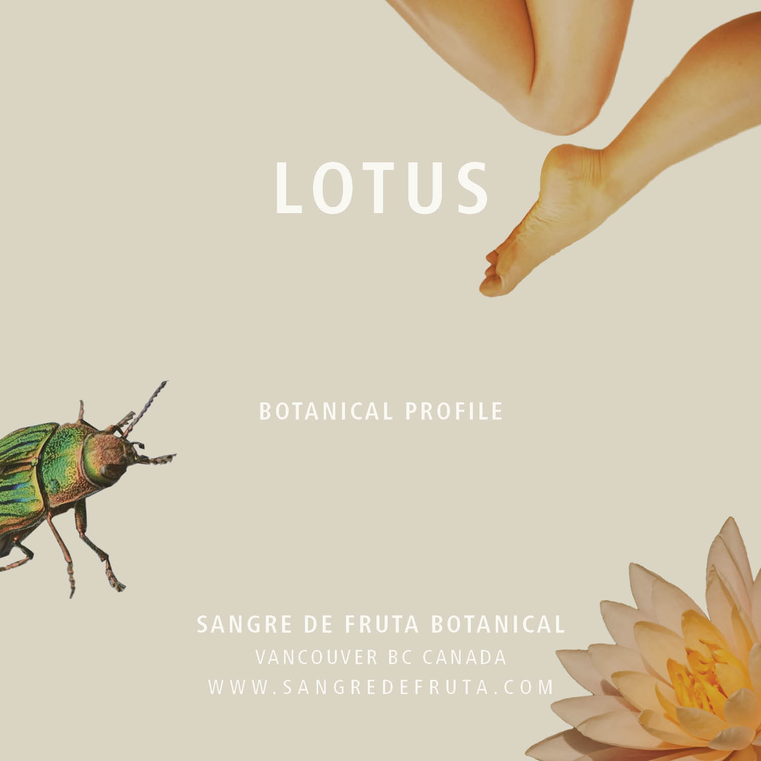 Lotus_Botanical-profile.jpg