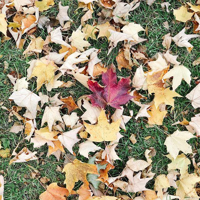 I bet Heaven smells like warm leaves ☀️🍁