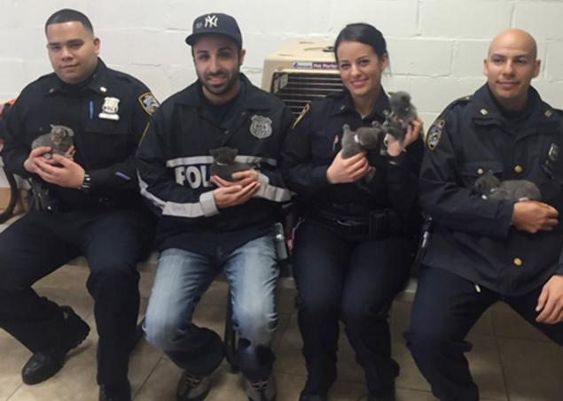 Officers from Brooklyn's 90th Precinct:  Photo: @NYPD90pct via Twitter