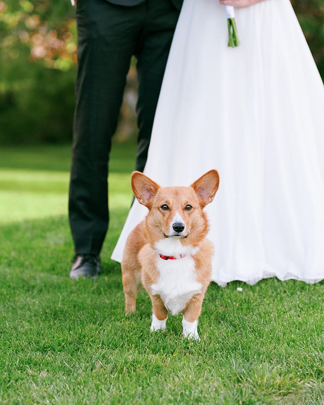 Bridget and Patrick got married during Hurricane Dorian - more precisely, their ceremony took place during the eye of the storm 🌪 Because the hurricane was in full swing by the time we were ready for photos, we got together this past weekend to do some beautiful bridals - sweet puppy @rubywelshcorgi included! Swipe to see the full family photo 📸 . . . #halifax #chasinglight #halifaxweddingphotographer #darlingweekend #weddinginspo #halifaxweddingphotographers #halifaxphotographer #weddingphotography #halifaxweddings #shesaidyes #postthepeople #brideandgroom #weddingstyle #weddingplanning #soloverly #weddingwire #ohwowyes #weddingportraits #weddingideas #pursuepretty #portraitkillers #weddingdress #theknot #weddingflowers #risingtidesociety #weddingchicks #flashesofdelight #countrywedding #destinationweddingphotographer #petitejoys