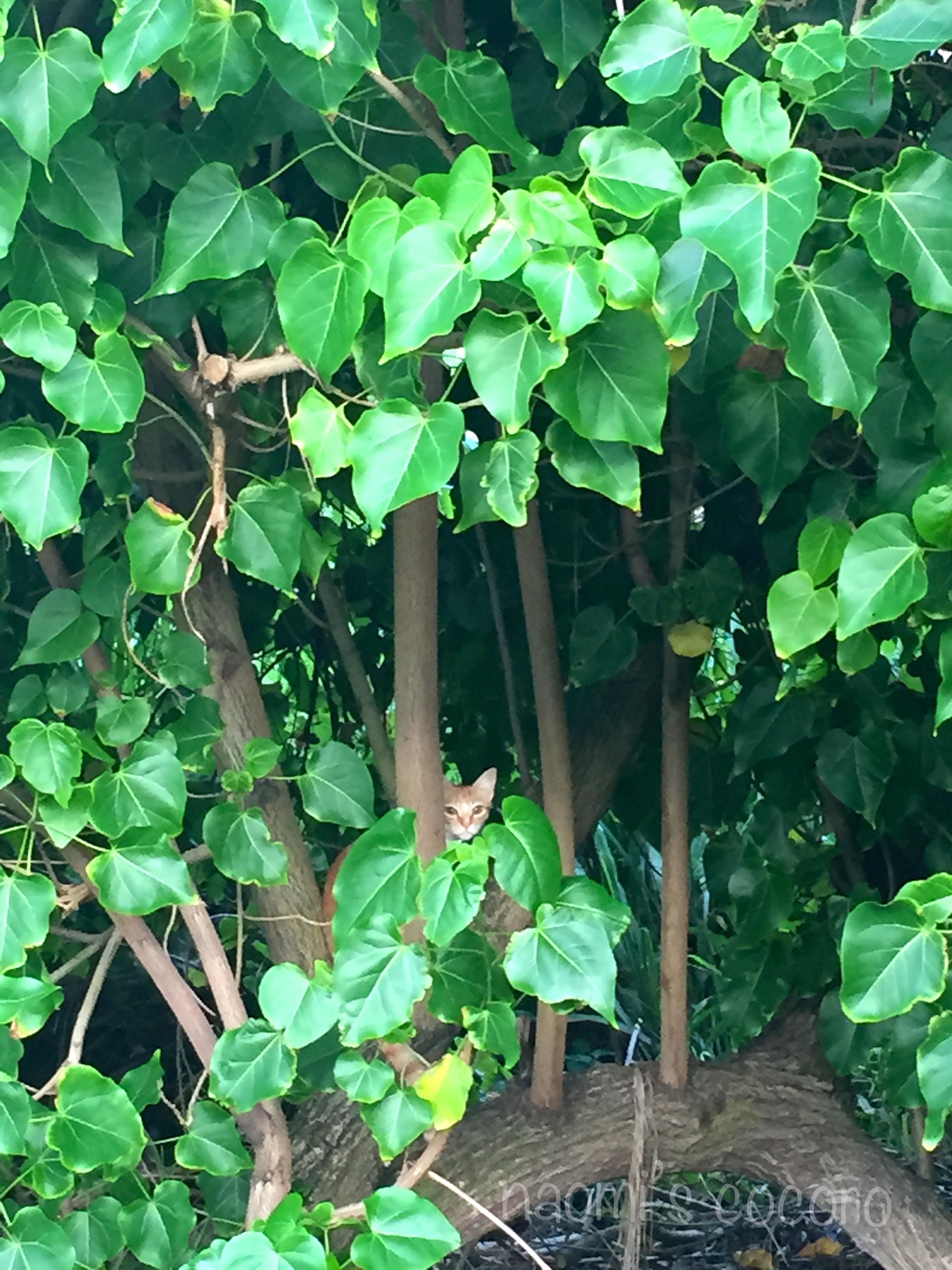 帰り道、タイガーにそっくりなねこが見ていた。。。