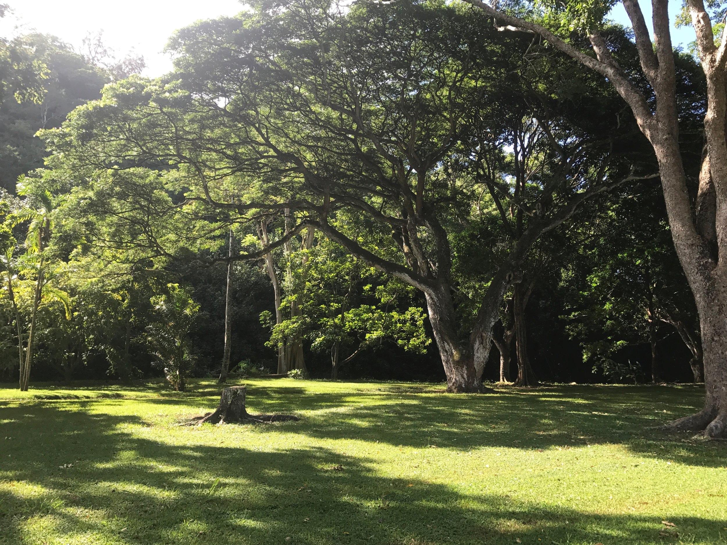 大きな木たちは、1970年代前半に植えられたのだそう!