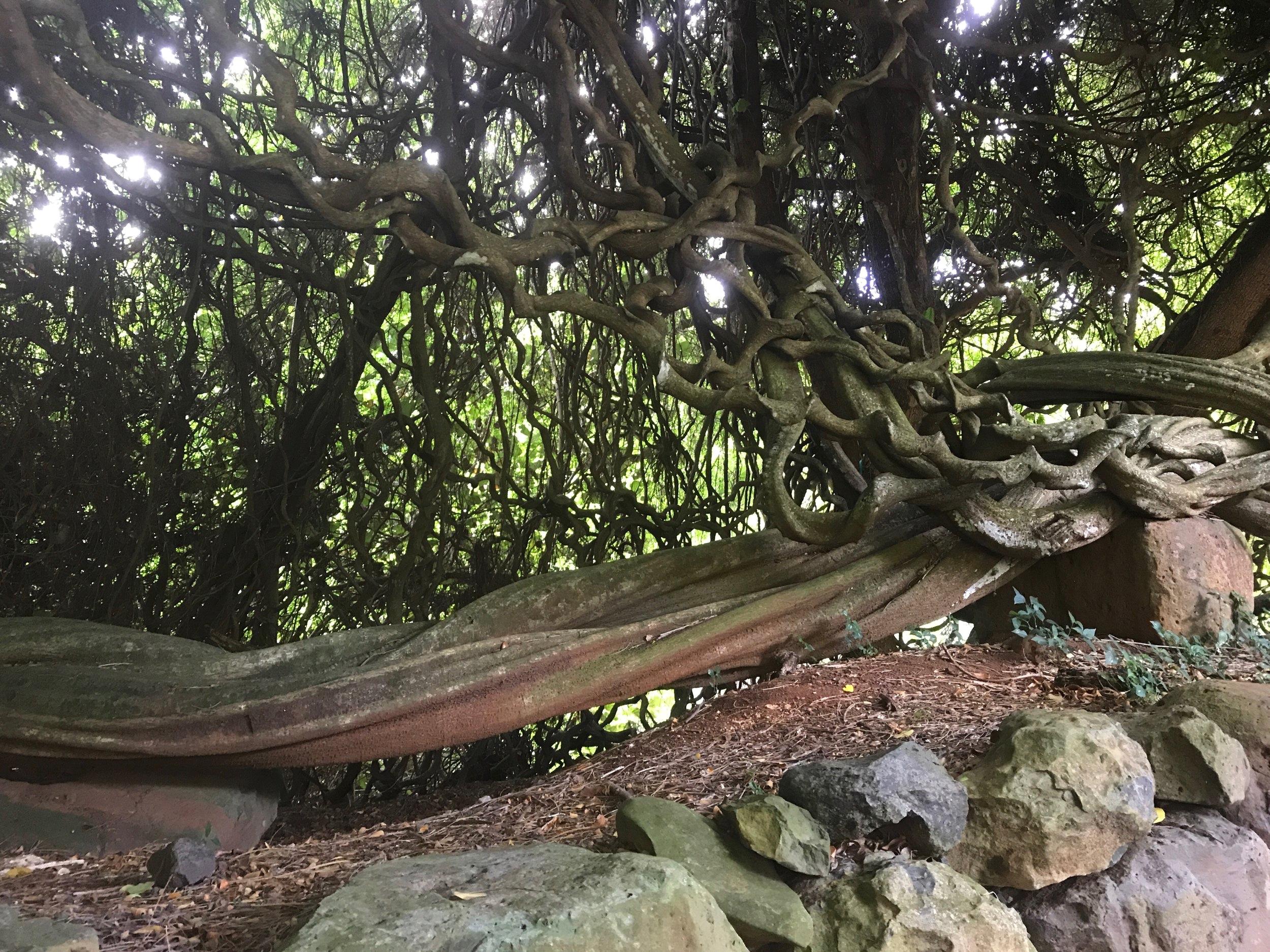 龍ですか?!自然の織り成す形には圧巻される!!