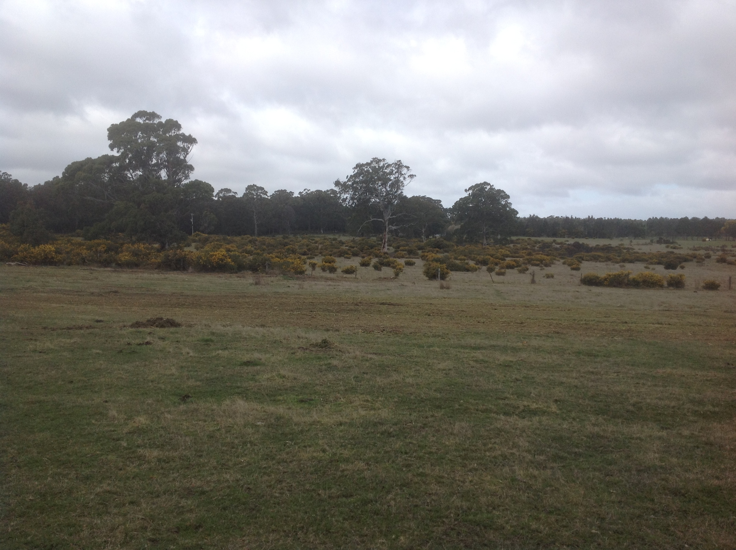 This site located in Ashbourne Victoria, covered 68 hectares with approximately 50% of the area infested with gorse. The area was cleared utilising Environmental Mulching + Earthworks PT 110 unit with mulcher and Jensan Farm Services Reach-Arm Mulcher and a Rear Mount HD Flail Mulcher.