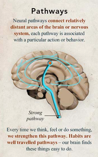 Photo Cred: http://www.diygenius.com/neuroplasticity-rewiring-your-brain-for-optimal-learning/