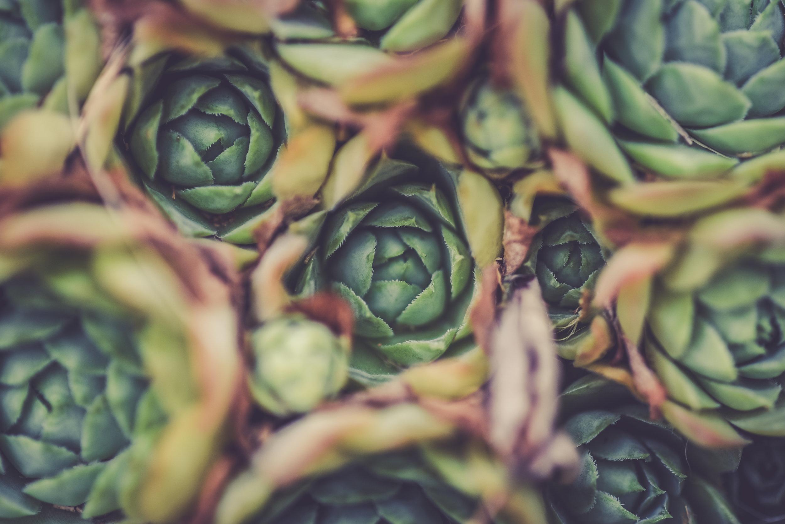 Vegetarian - by Ananda Lima