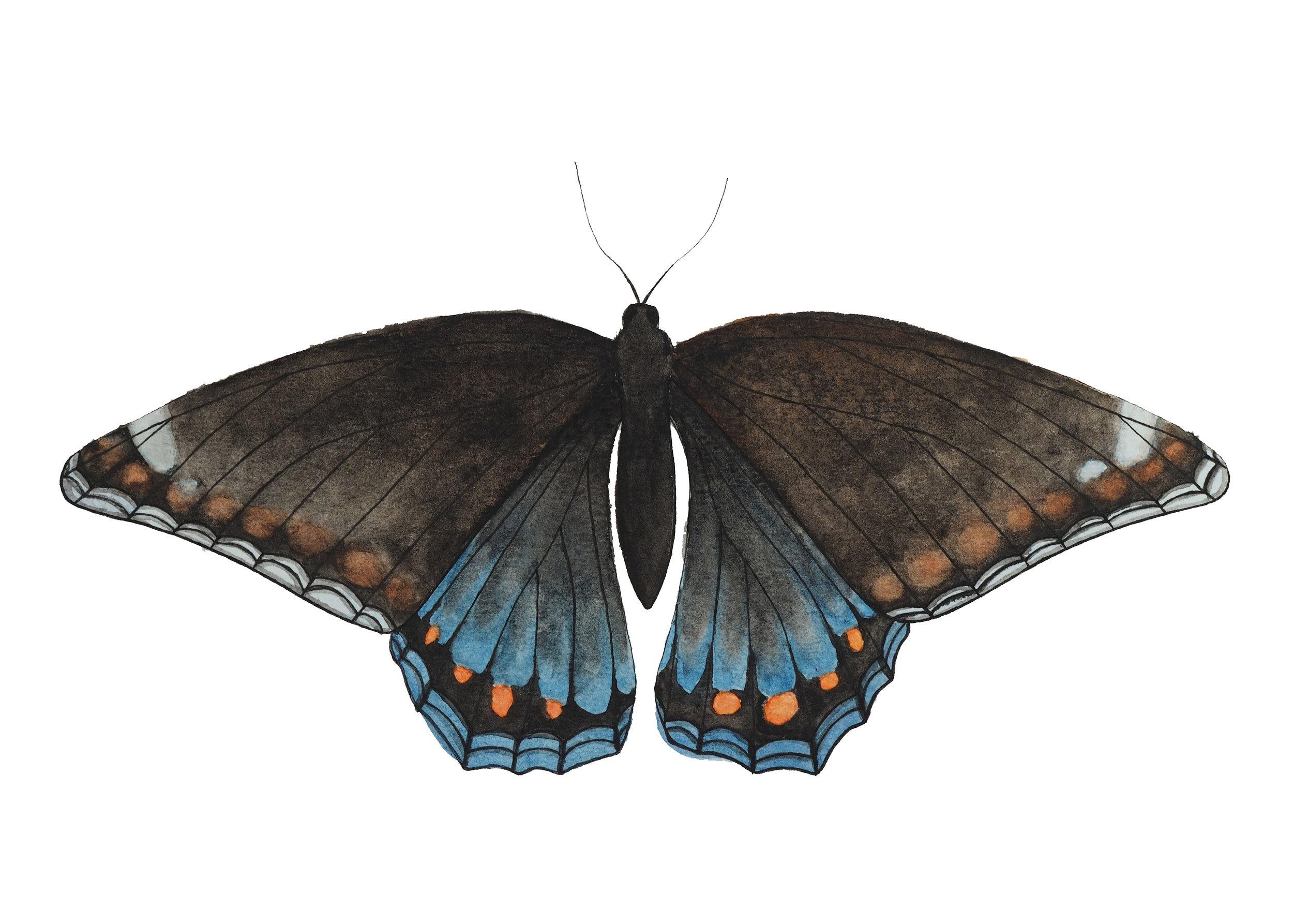 5 x7 print butterfly copy.jpg