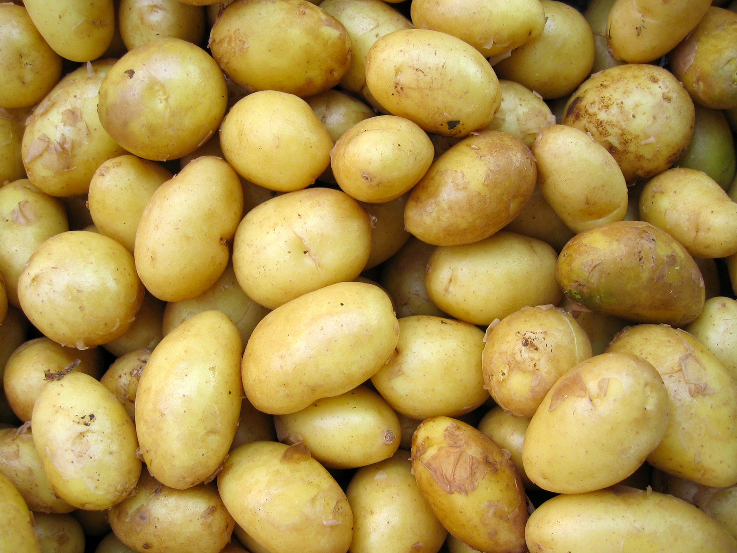 Potatoes - Download Crop Programme