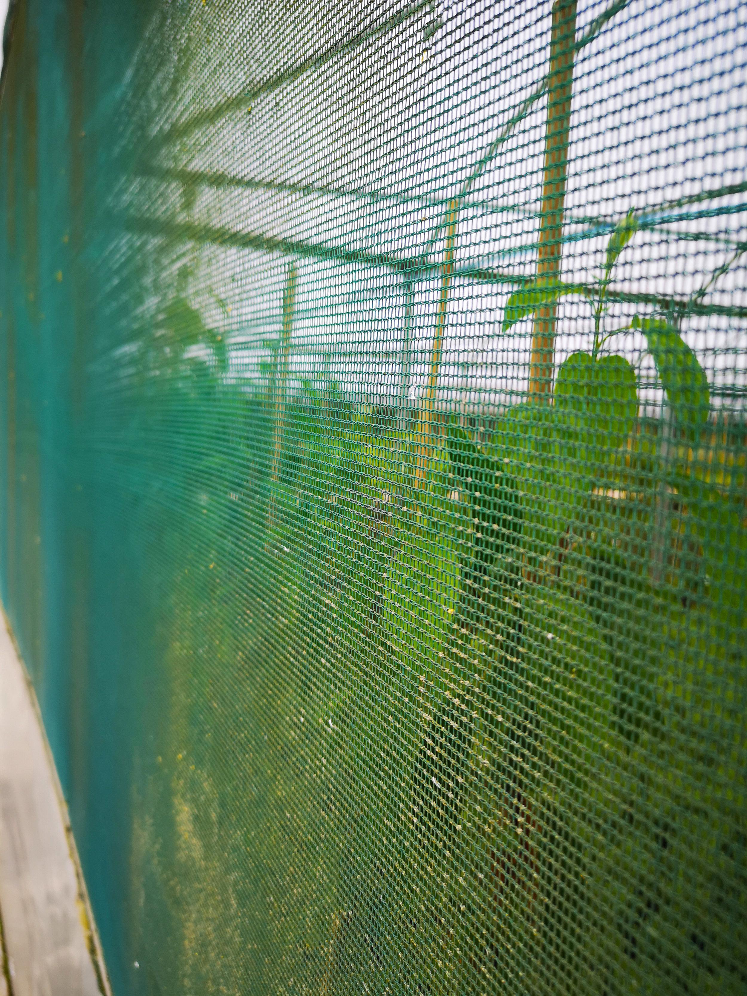 Netting side view.jpg