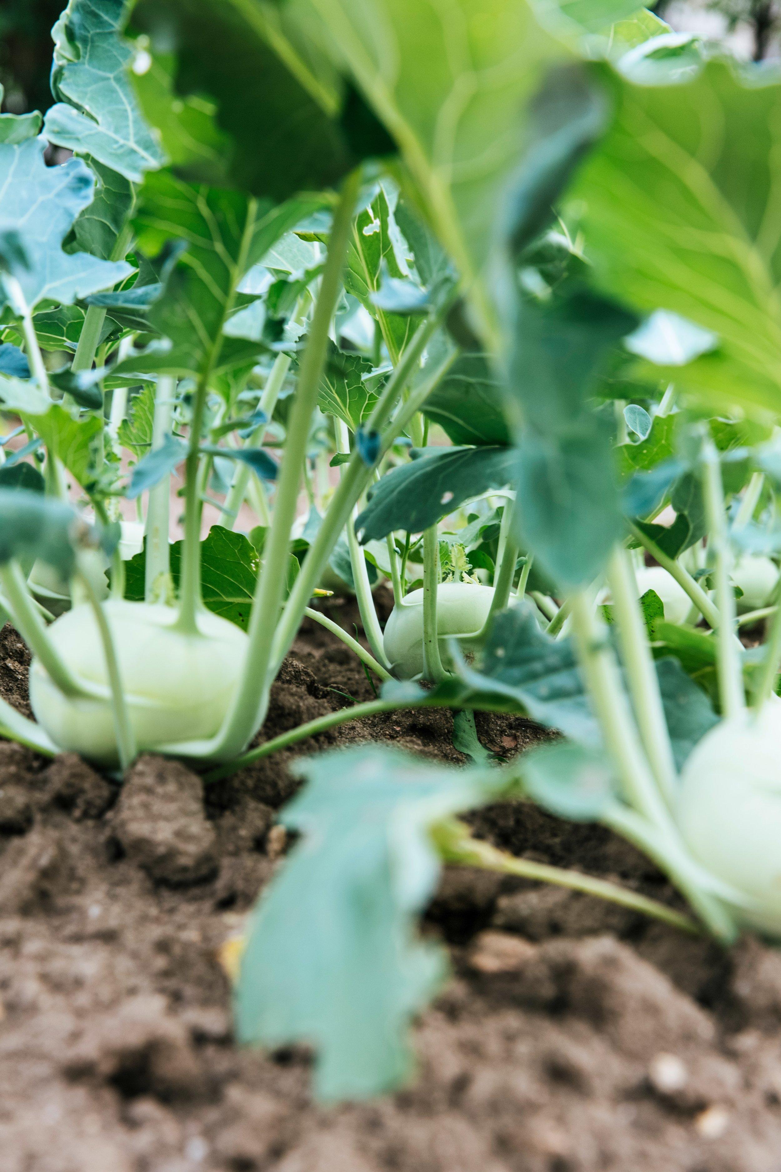 agriculture-close-up-farm-121629.jpg