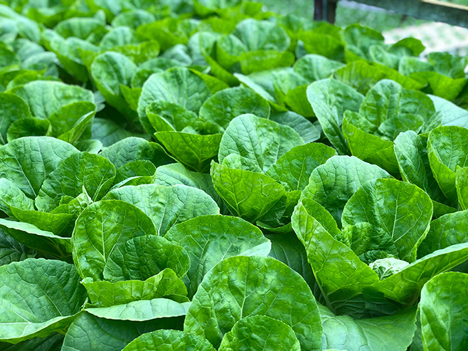 Plant Fertilisers -