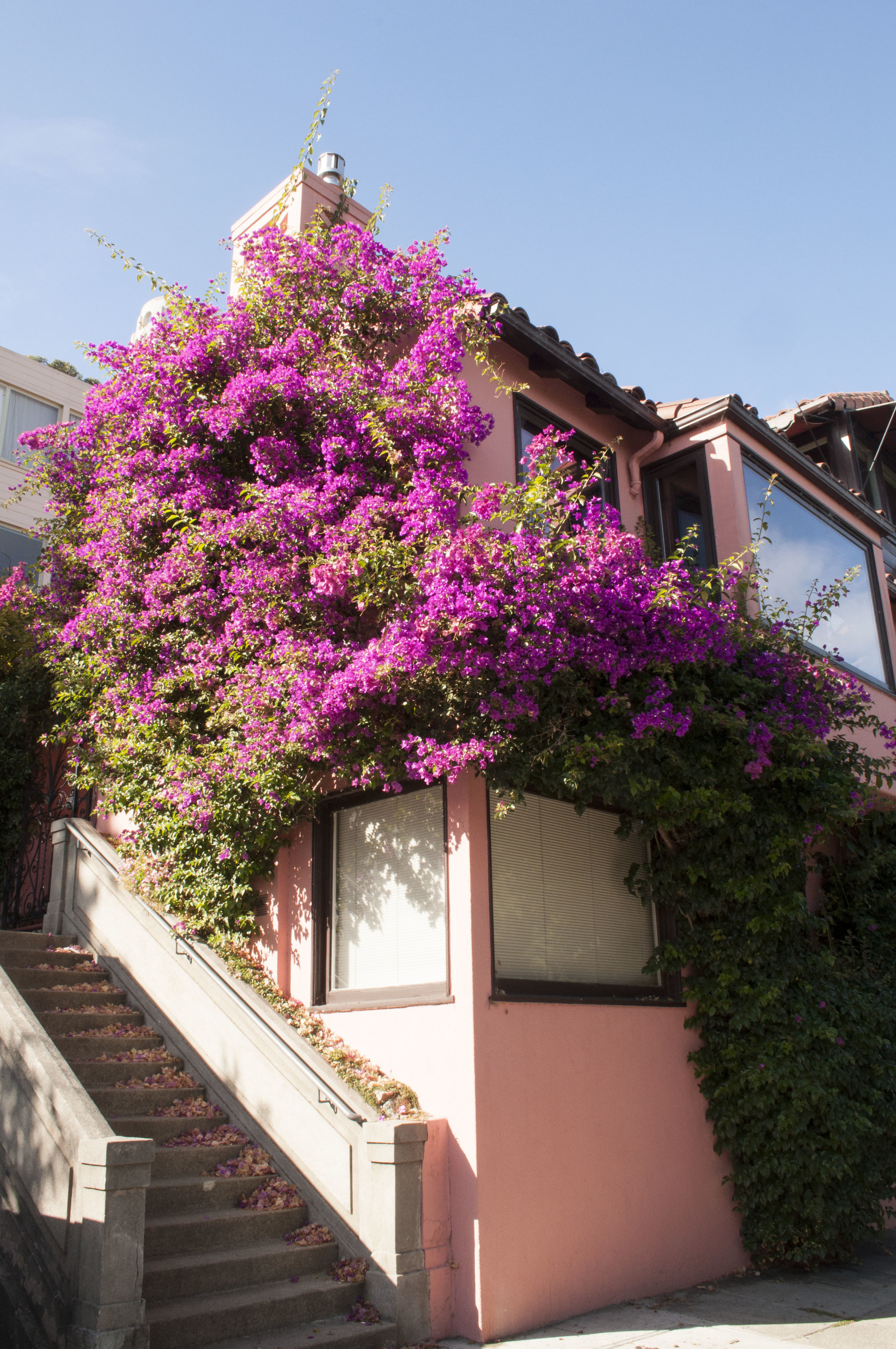 Bougainvillea at the midpoint of Filbert Steps