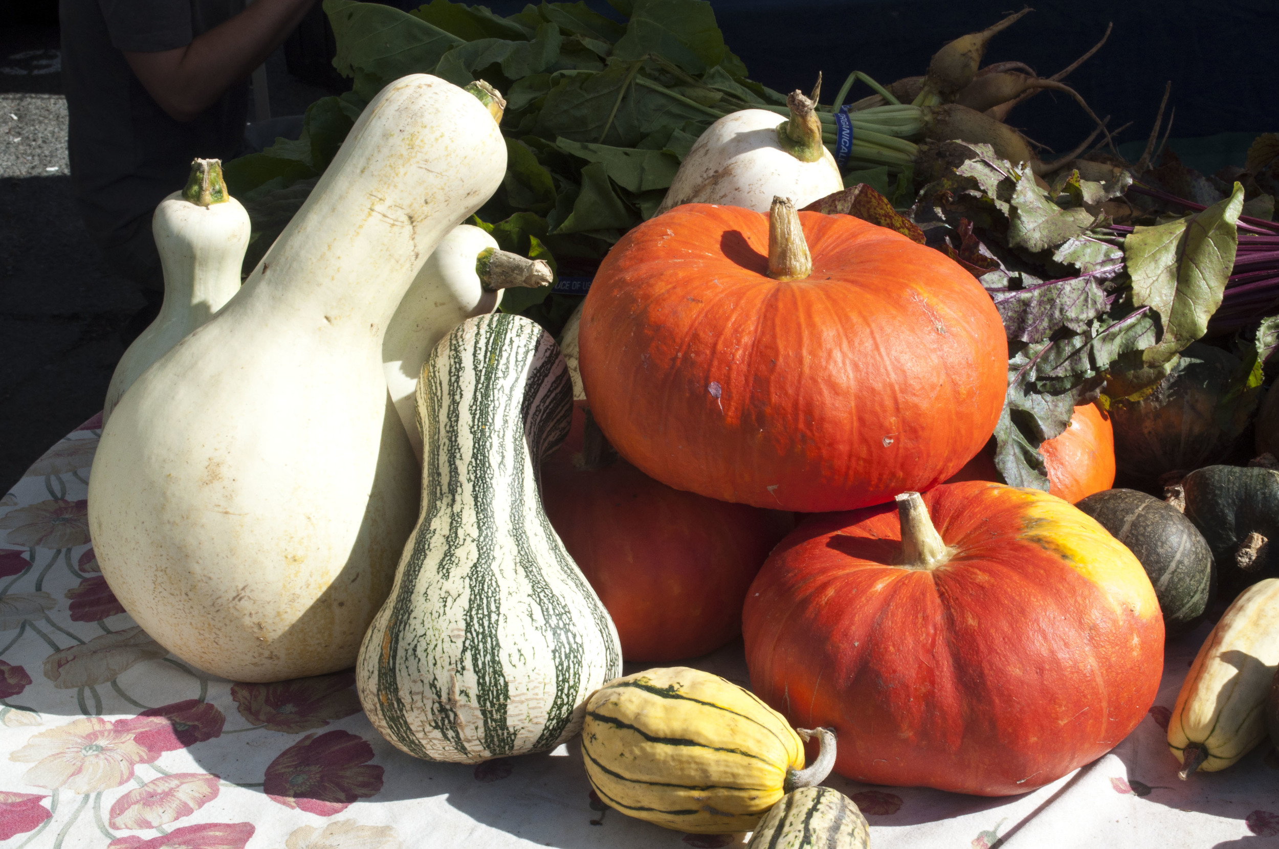 Gourds at Fort Mason