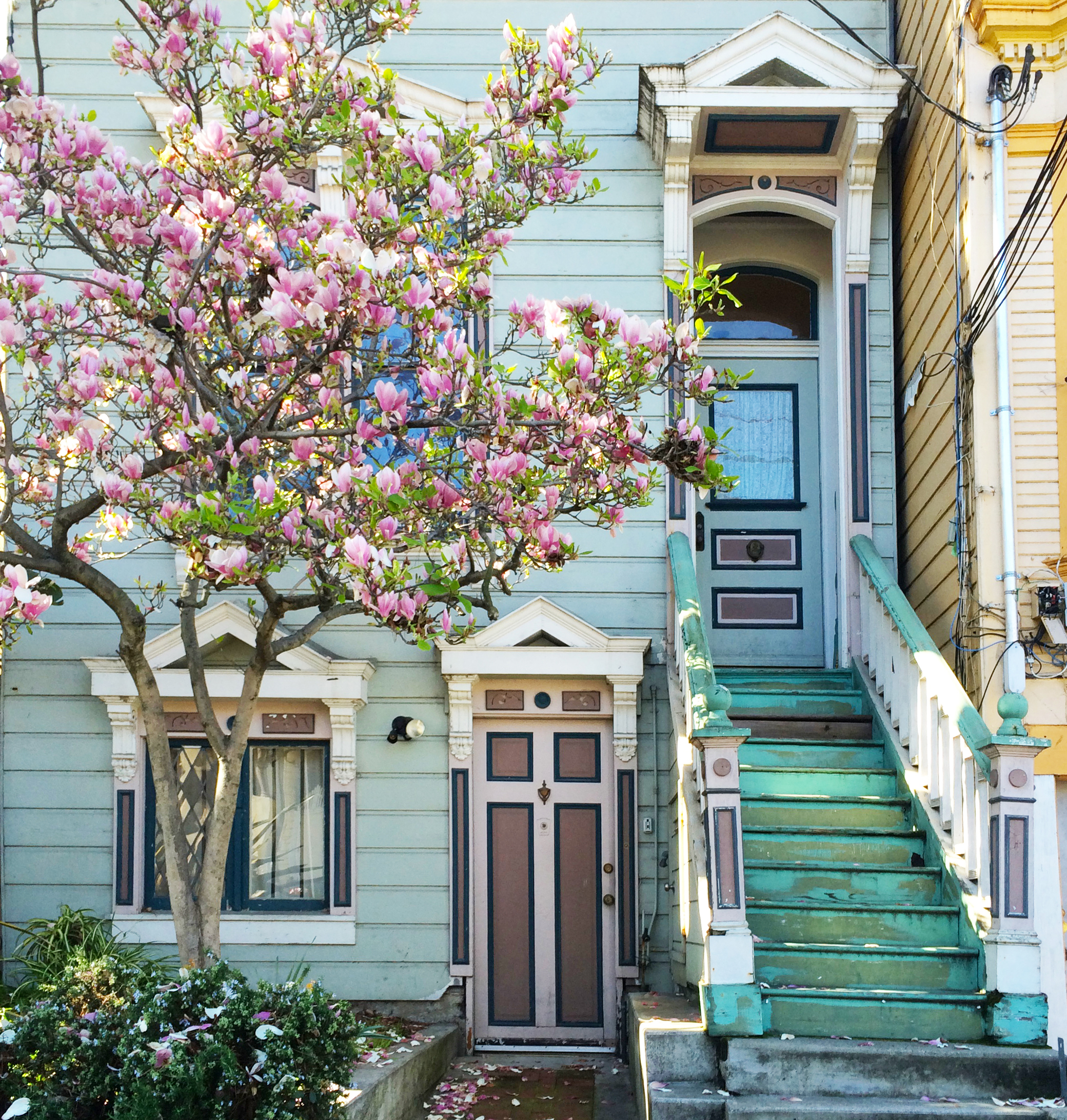 24th street in bloom