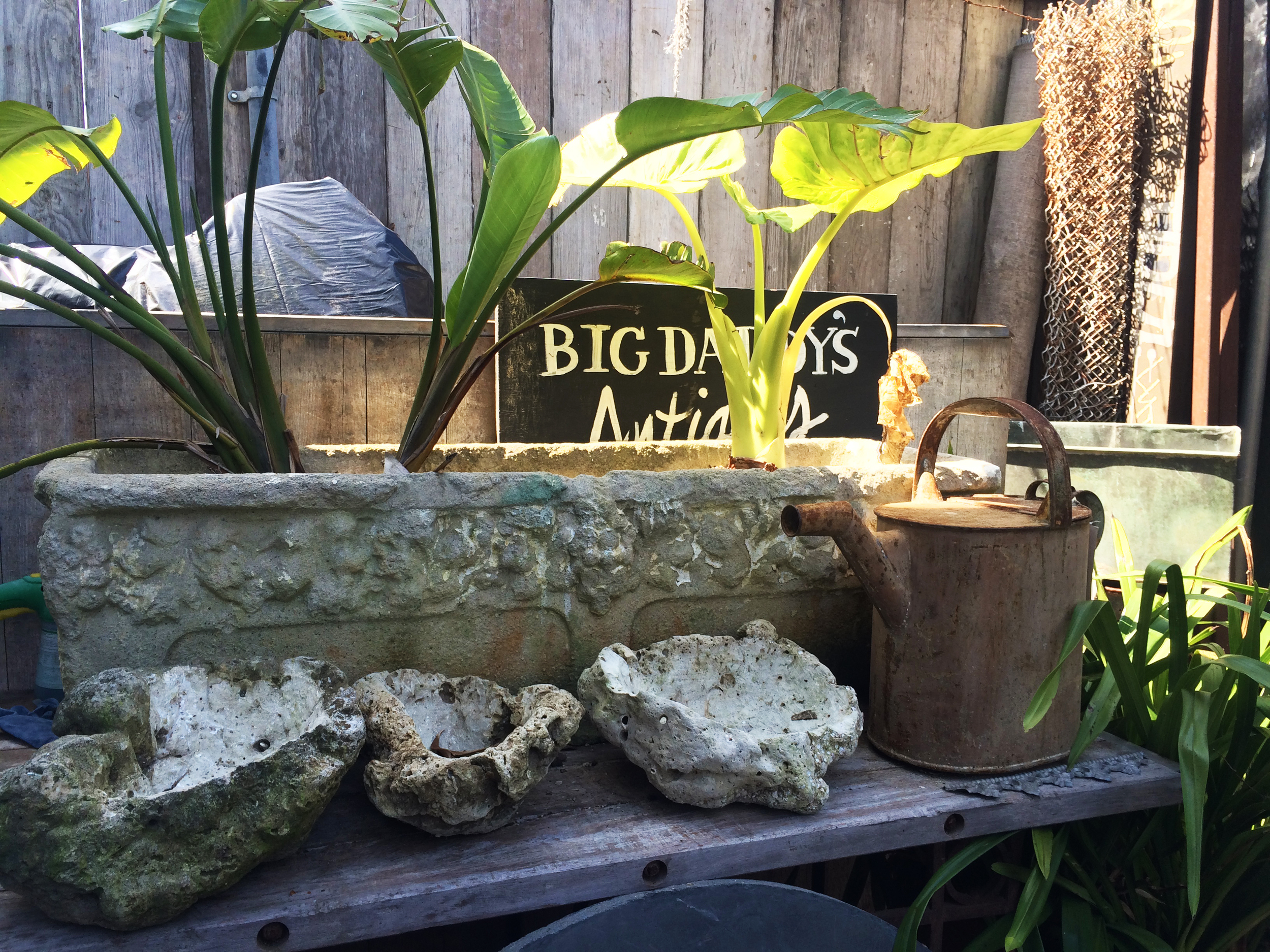 garden inspiration at big daddy san francisco