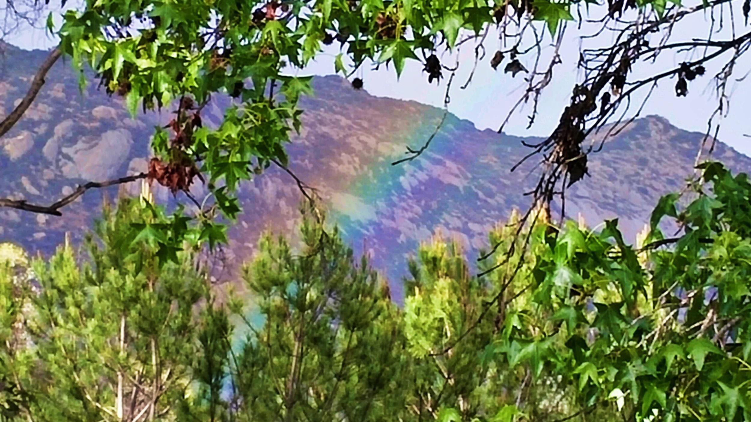rainbow san diego