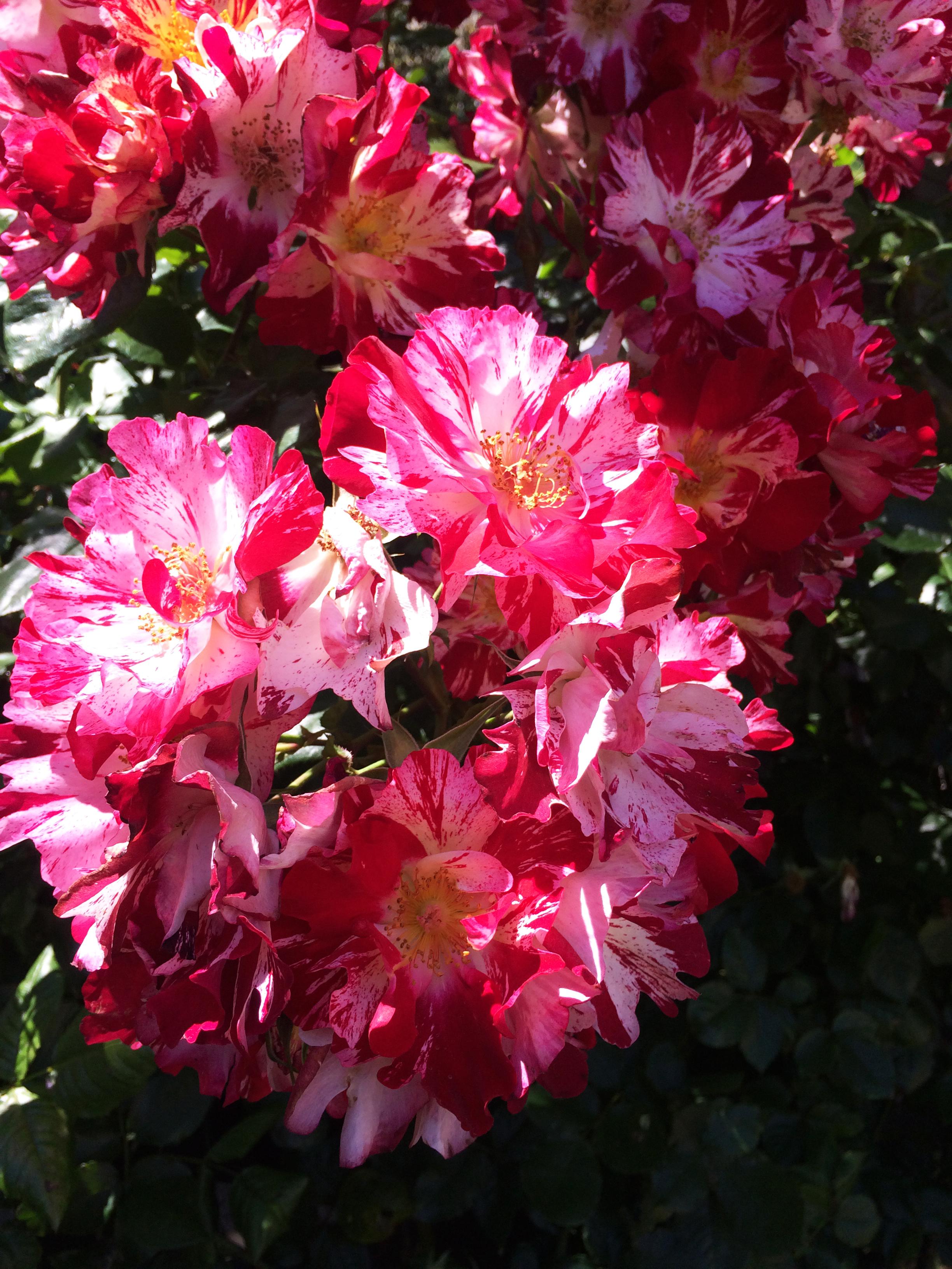 pink florals san francisco