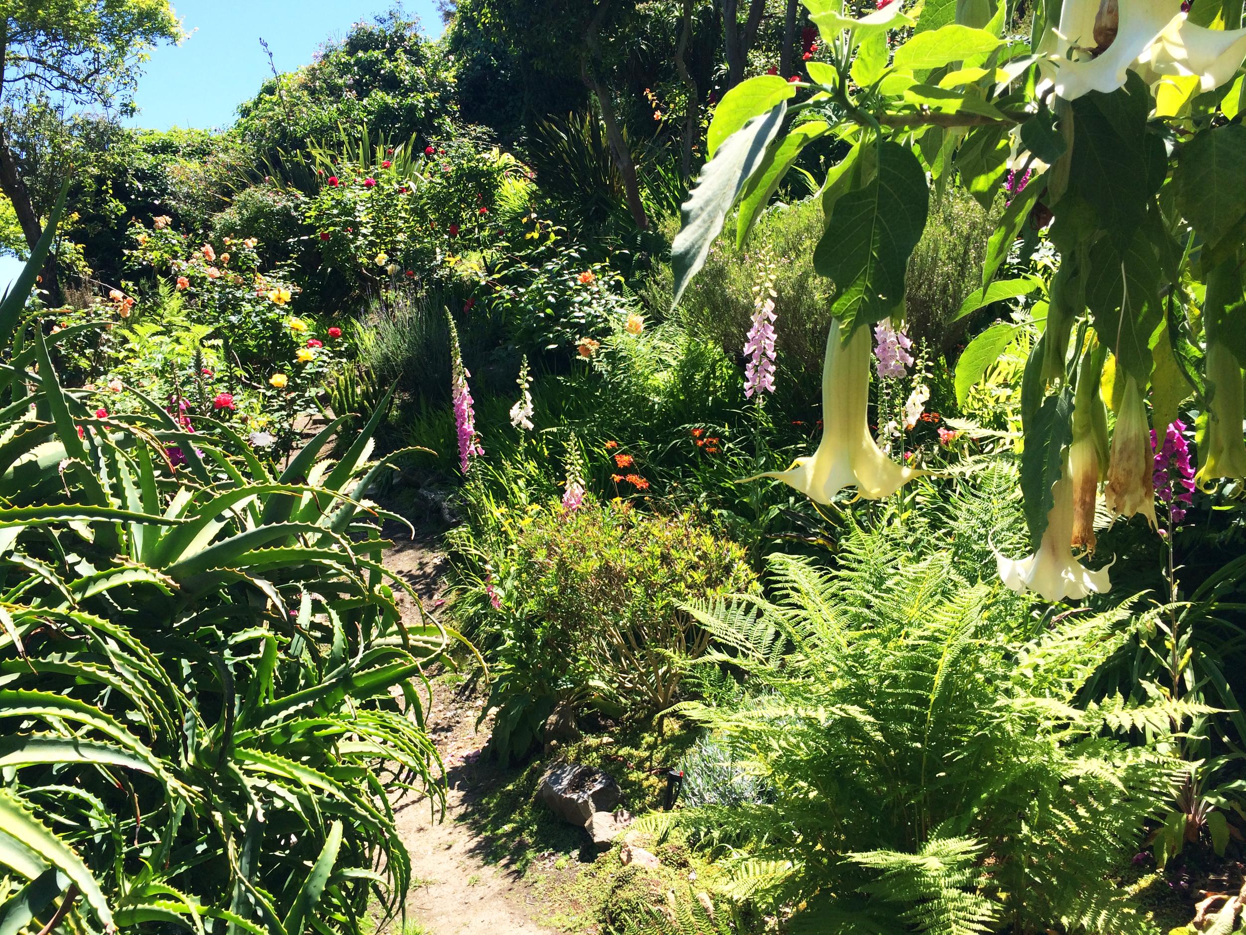 green green green san francisco garden hill
