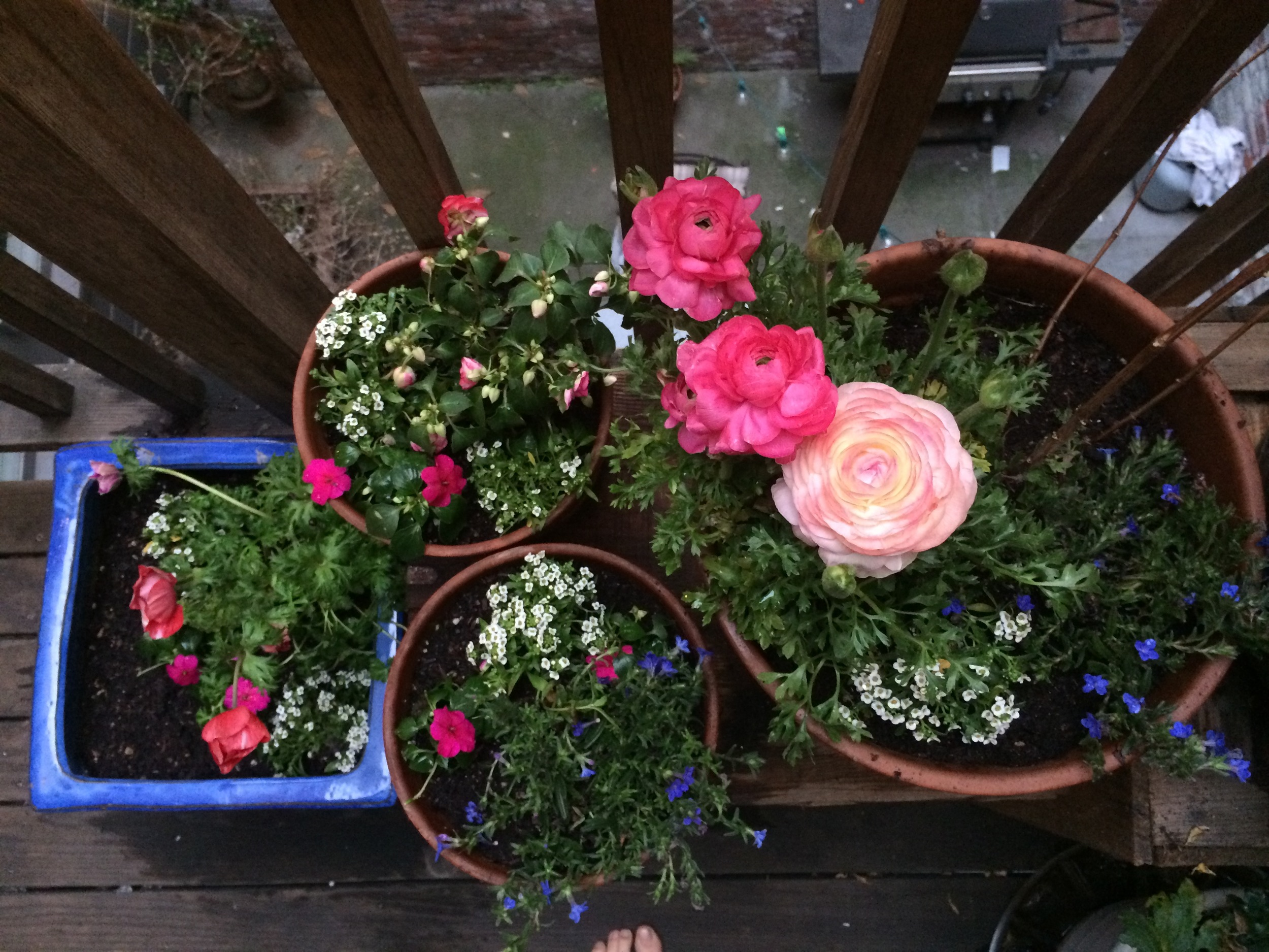 This is another early attempt at a container garden. At the top, you can see the dead plants downstairs! I loved all these colorful blooms, but they didn't like our harsh sun at midday and were pretty tasty to the neighborhood vermin.