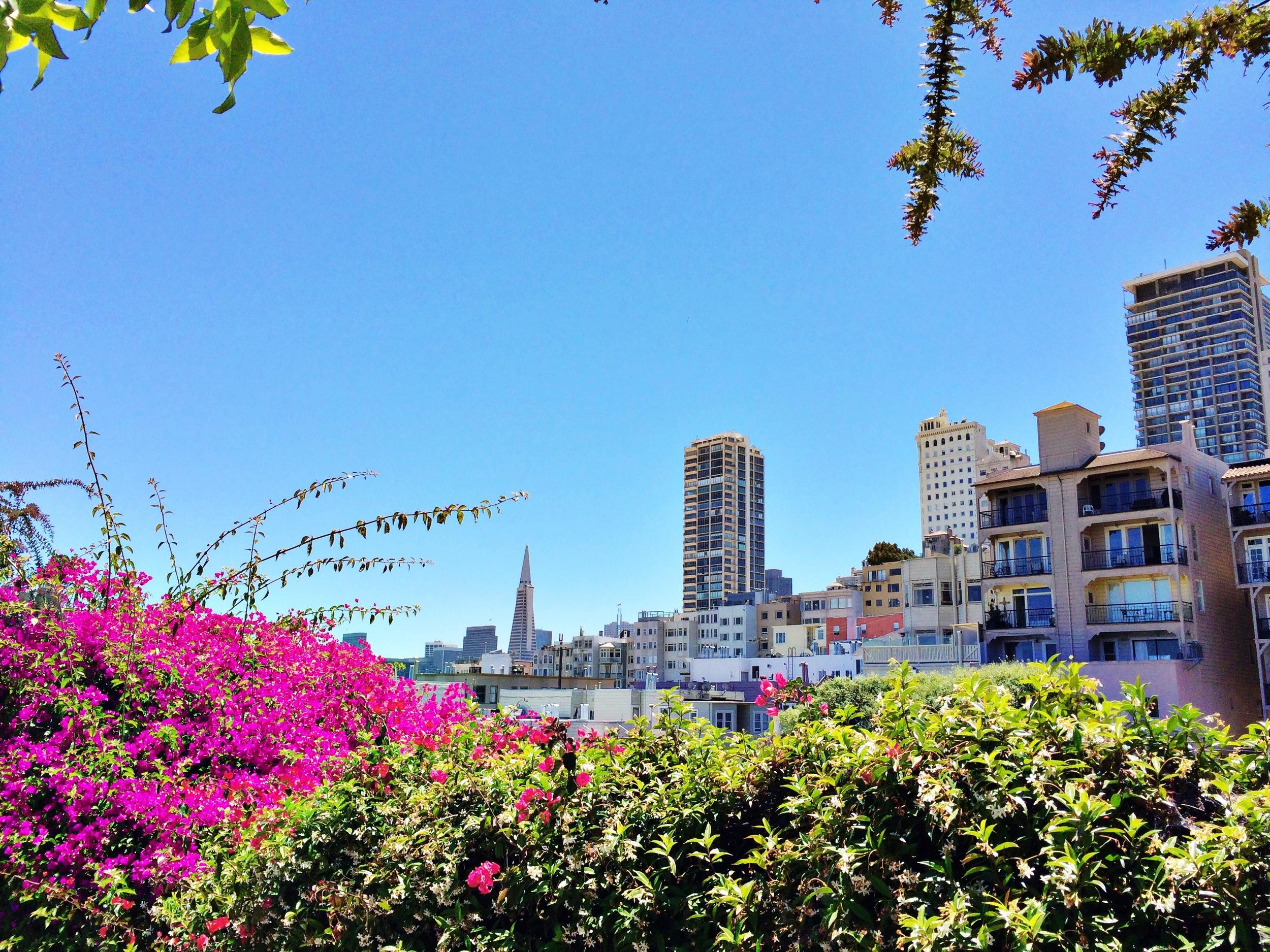 pink city skyline