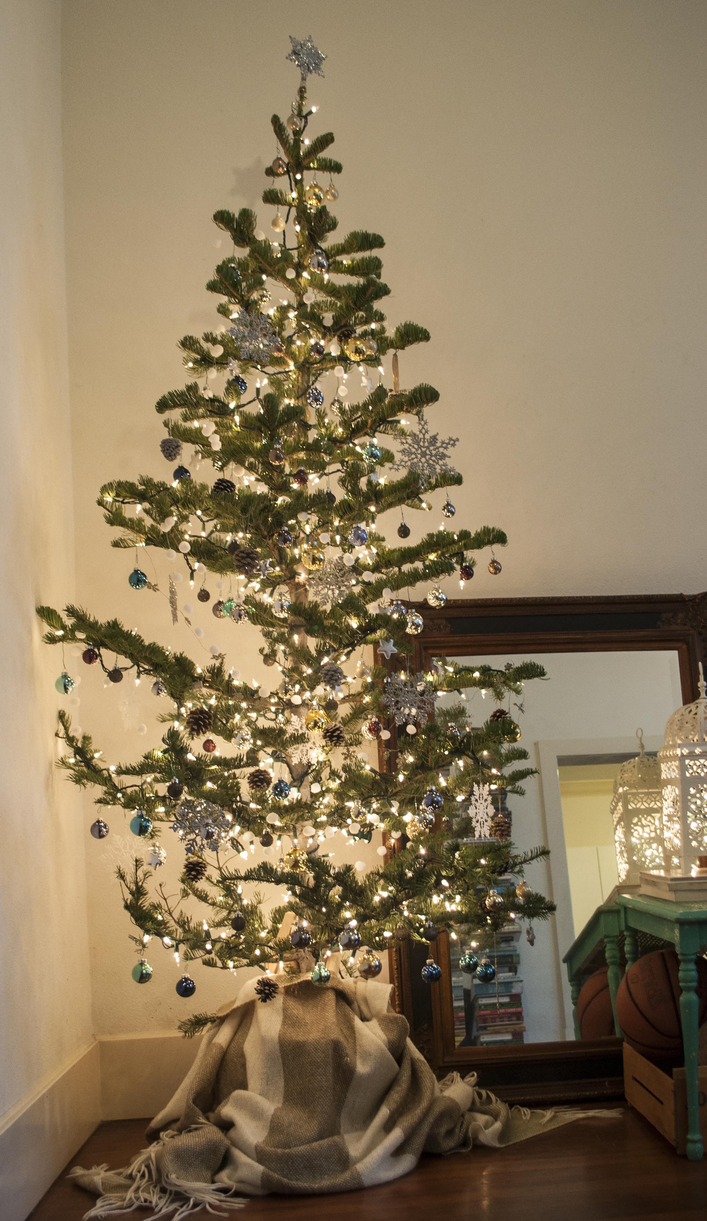 silvertipped fir silver tipped fir charlie brown christmas tree