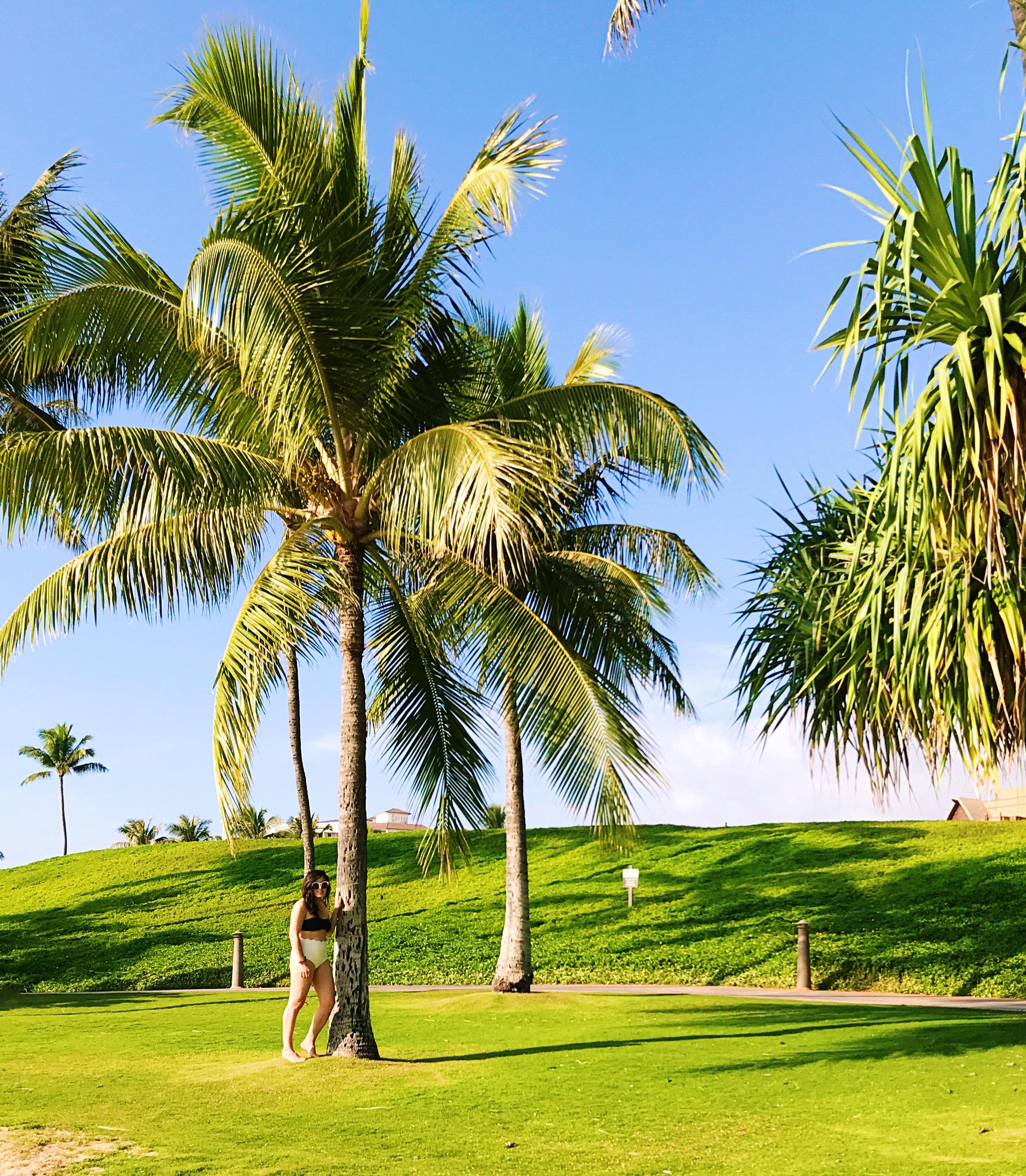 Oahu #oot beahces