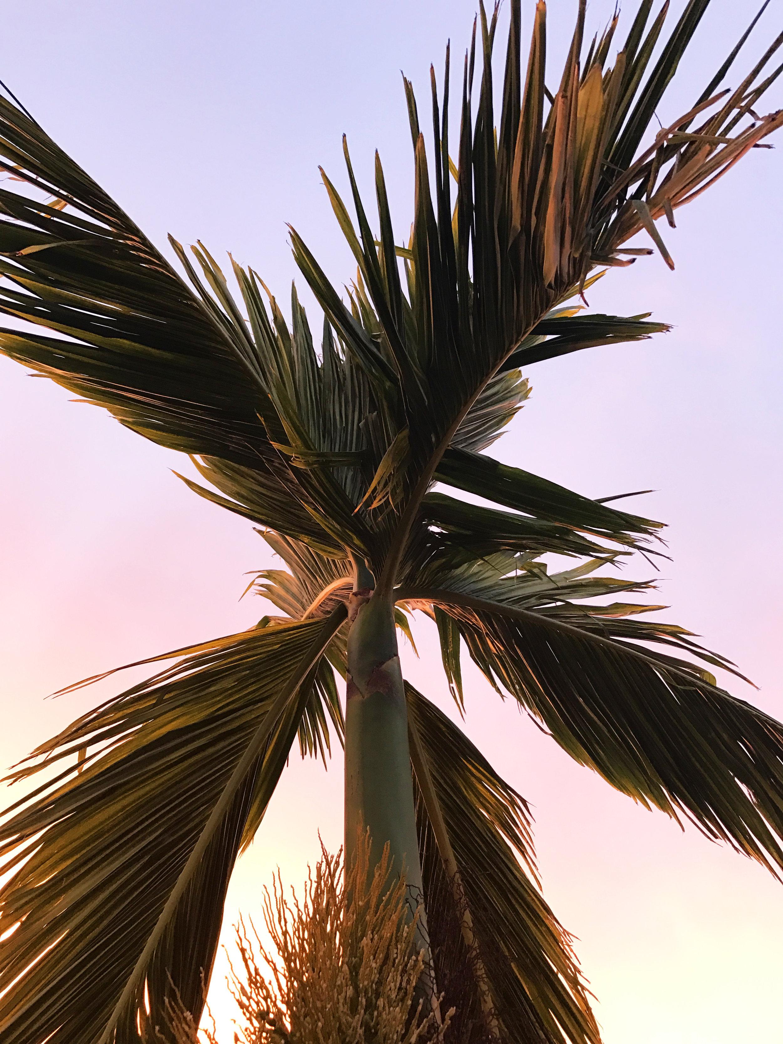 palm vibes oahu