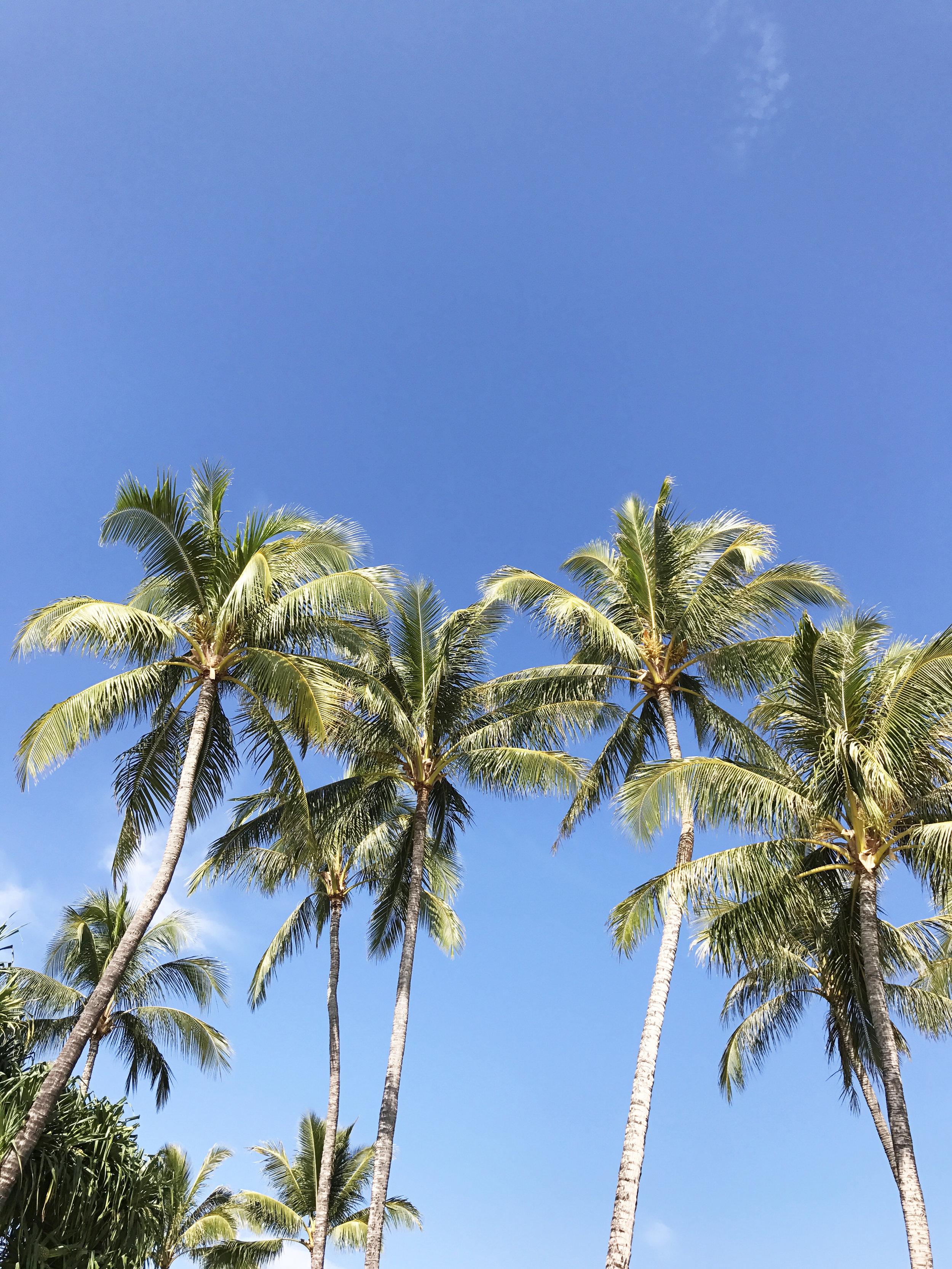 palm tree tropical paradise vibes hawaii