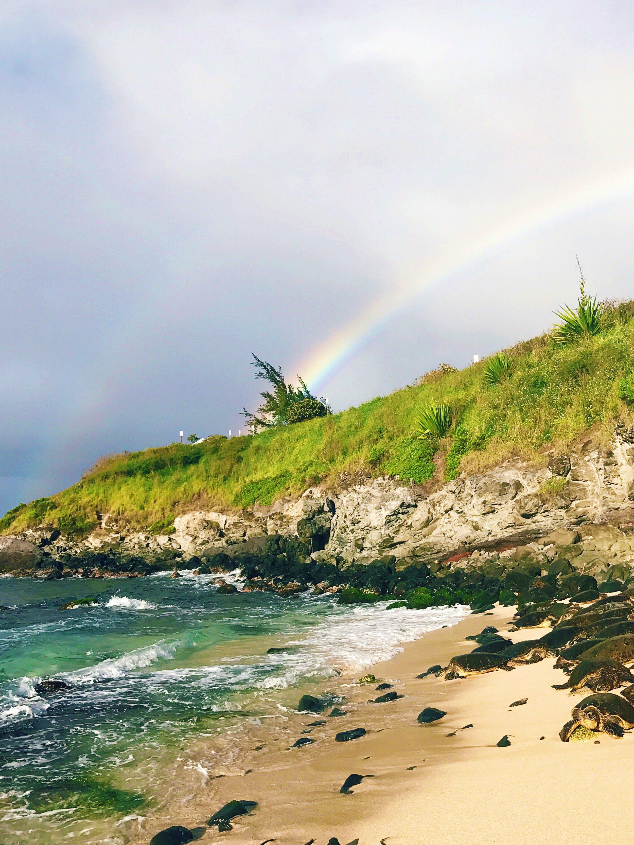 ho'okipa bay maui turtle rainbow views