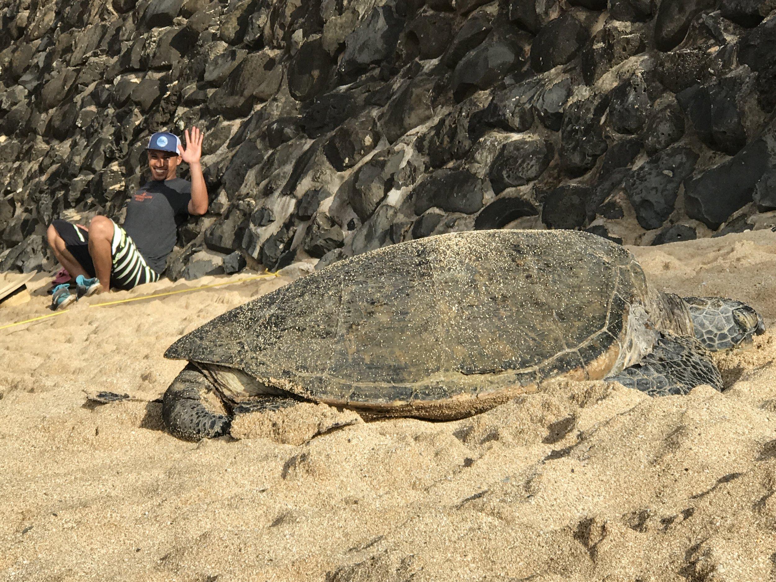 sea turtle views maui things to do