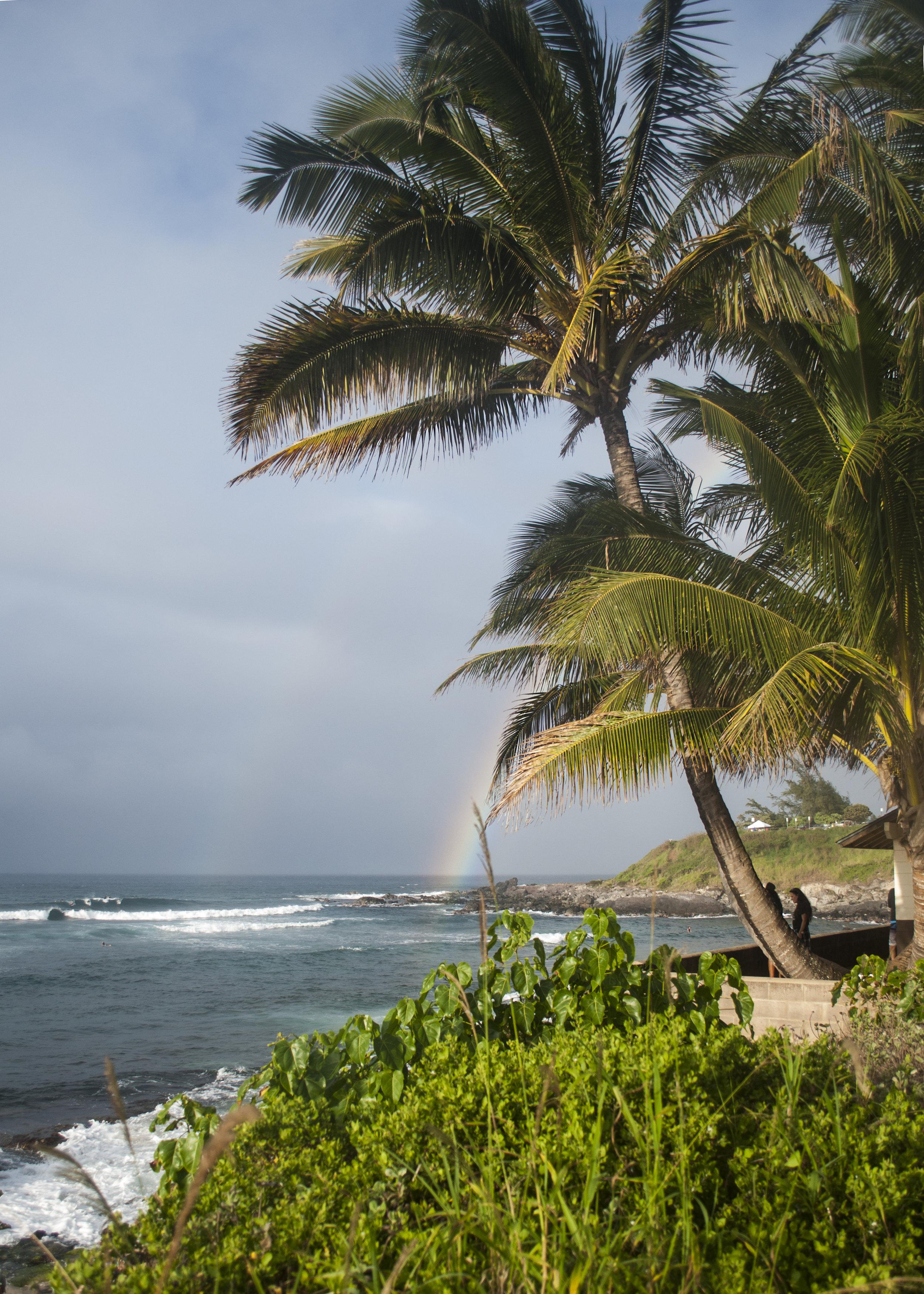 palm tree beach rainbow maui hawaii vacation