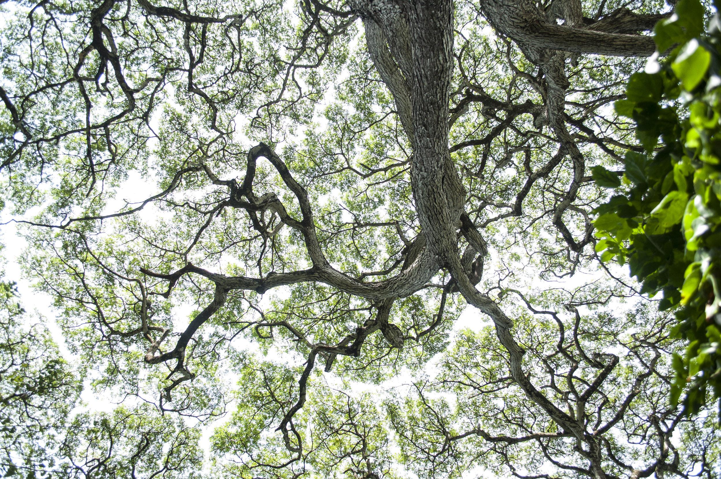 maui vibes trees views