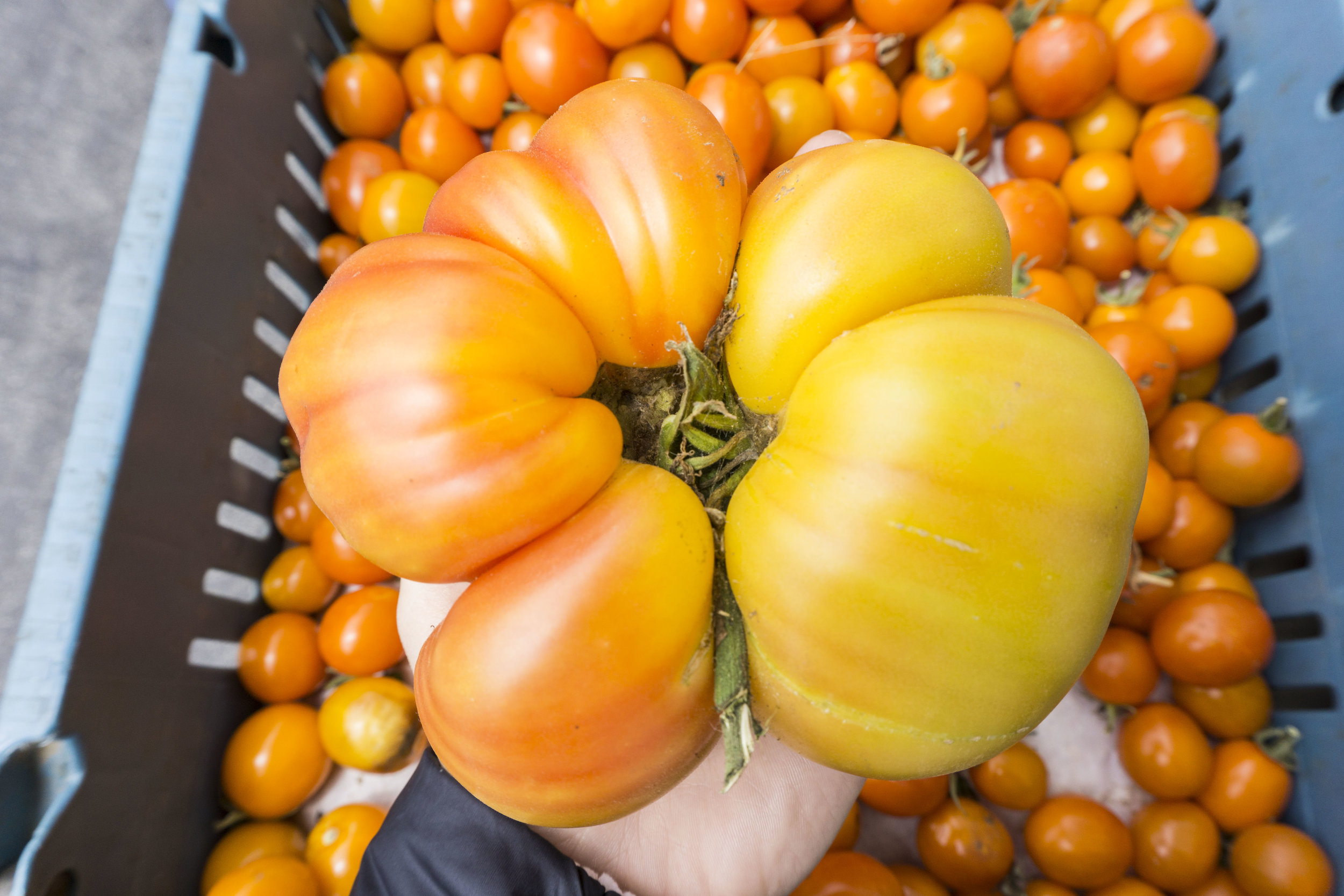heirloom tomatoes farmers market finds