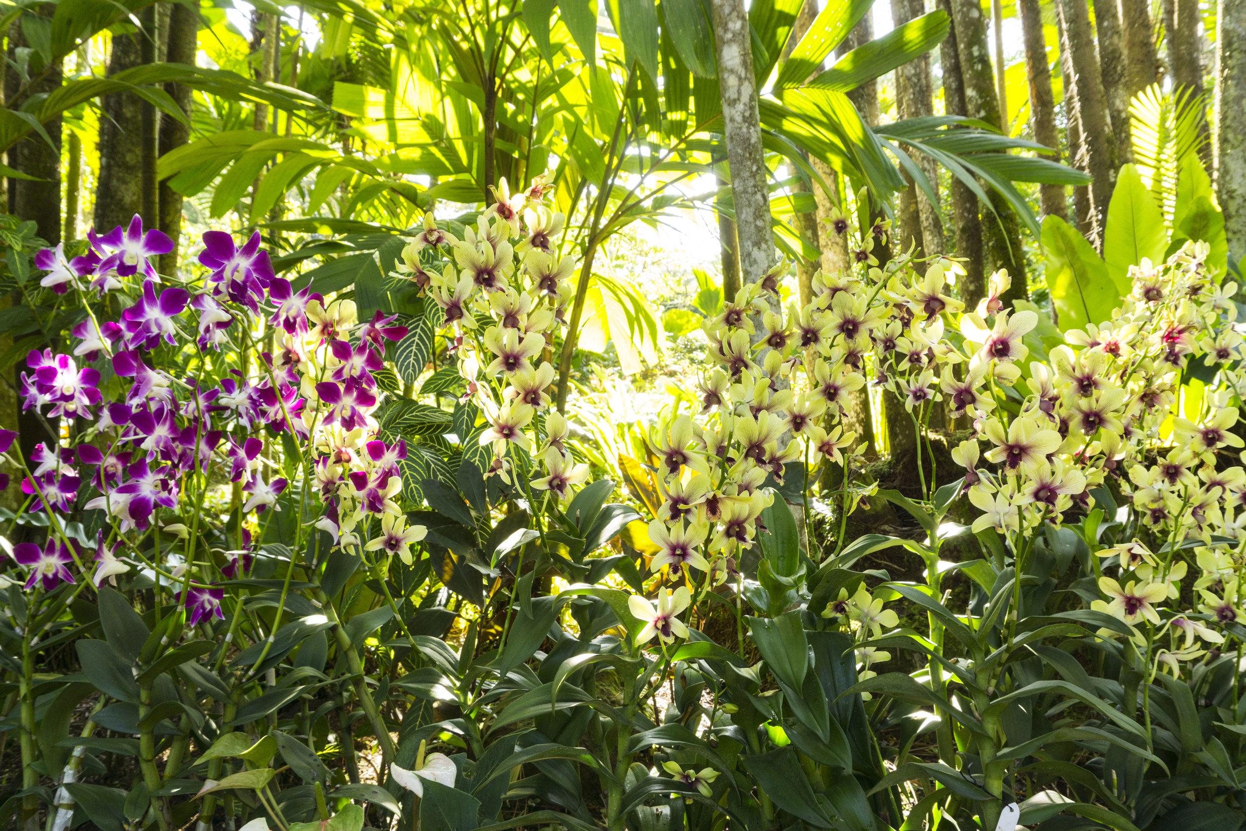 orchids singapore