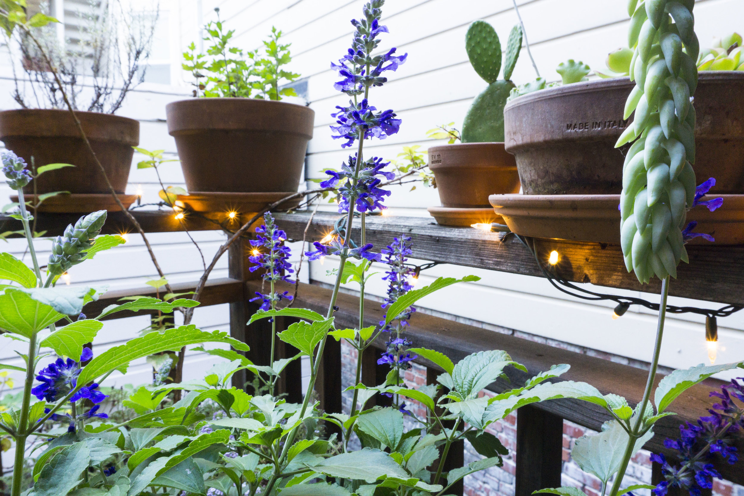 container garden tiny house living
