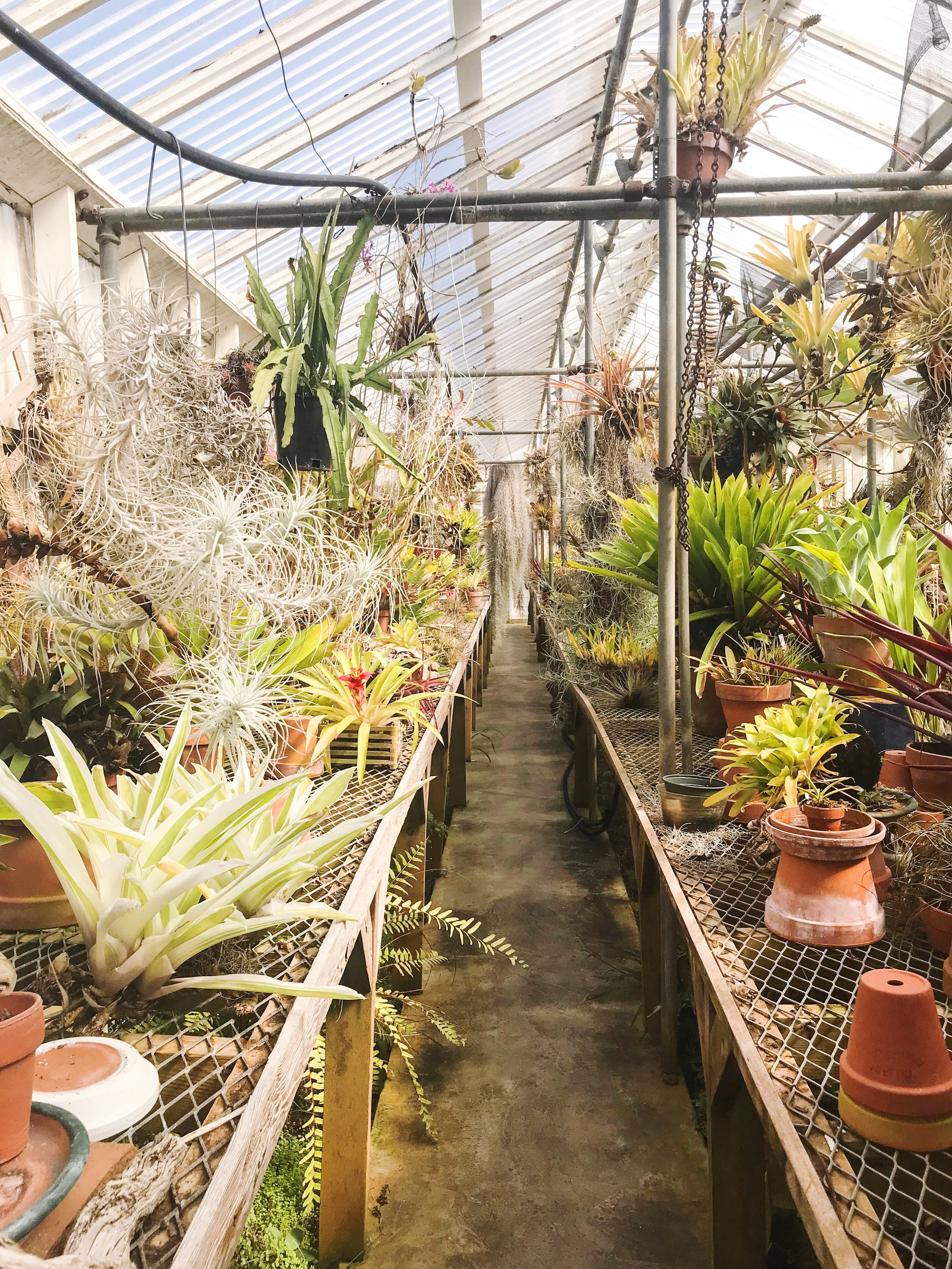 pacifica orchid farm exploration wanderlust