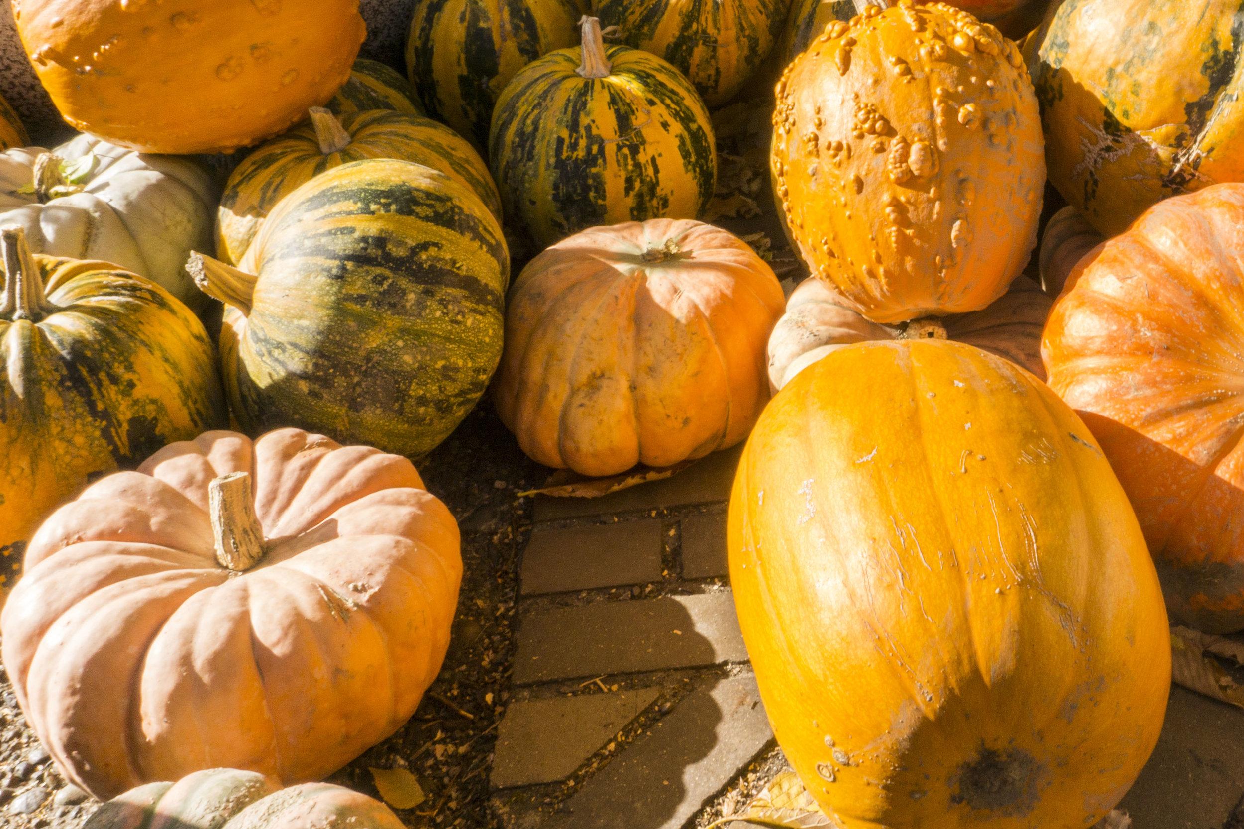 fall farmers market portland saturday