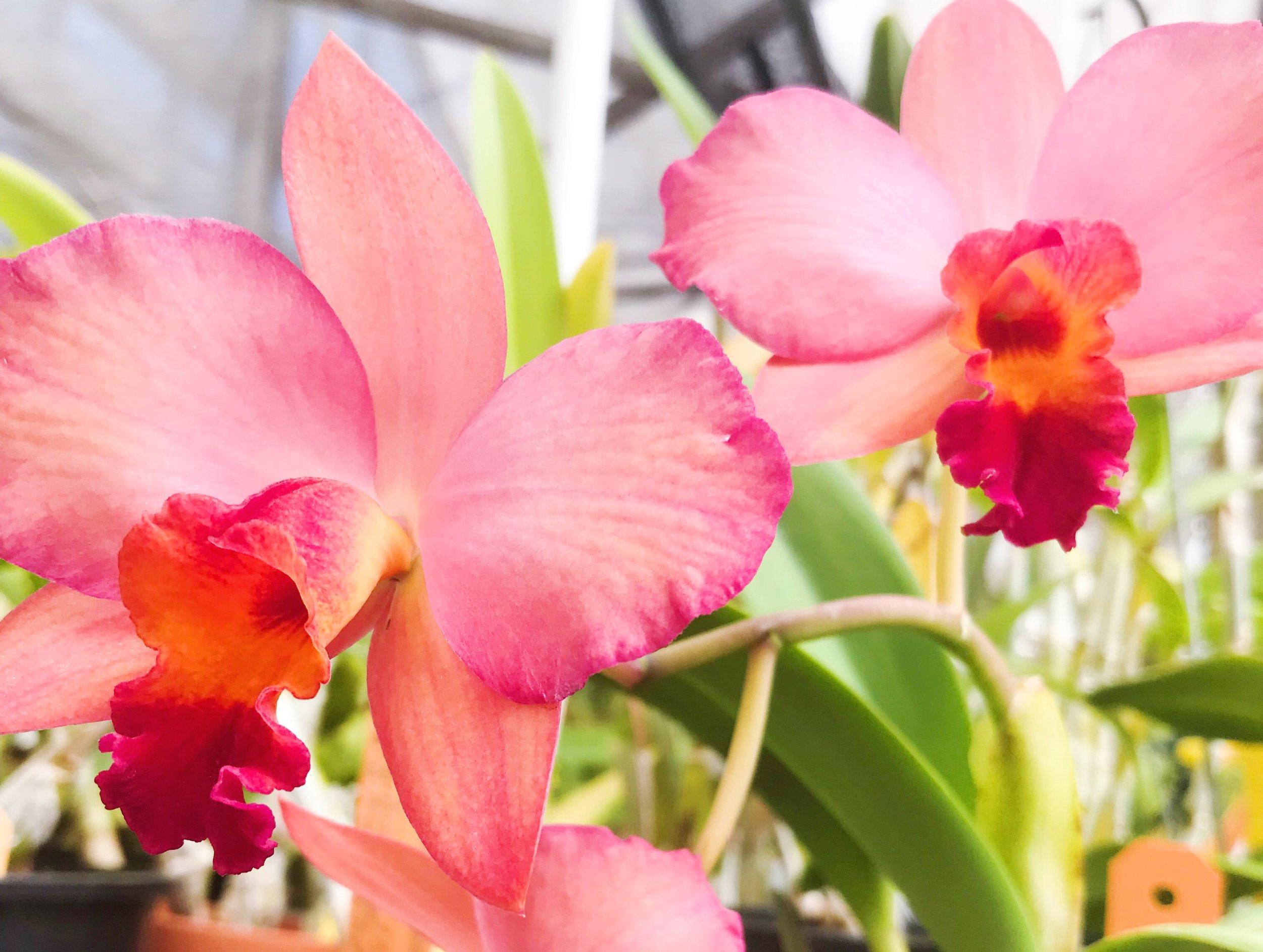 orchid farm half moon bay