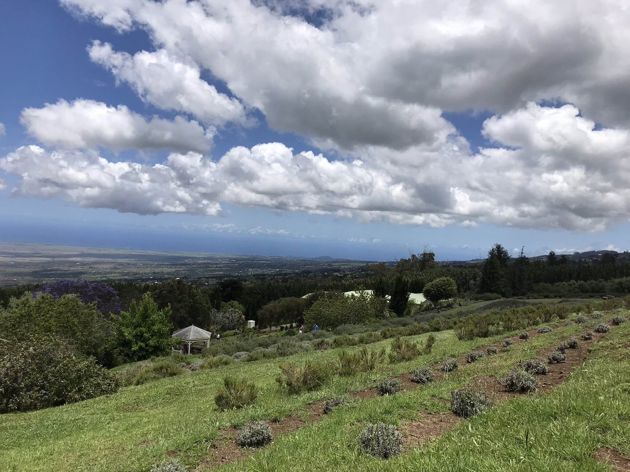 Maui Upcountry Lavender Farm