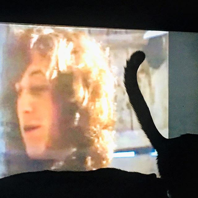 "Seems my cat did not enjoy Slade In Flame, but Noddy enjoyed my cat's butt even less. Also yes I am five decades old and am up at 4:30 in the morning playing video games and typing the words ""cat butt"" on the Internet, so adulthood has worked out real well, thanks for asking. :) #noddyholder #sladeinflame #mycatsbutt #howdoesitfeel"
