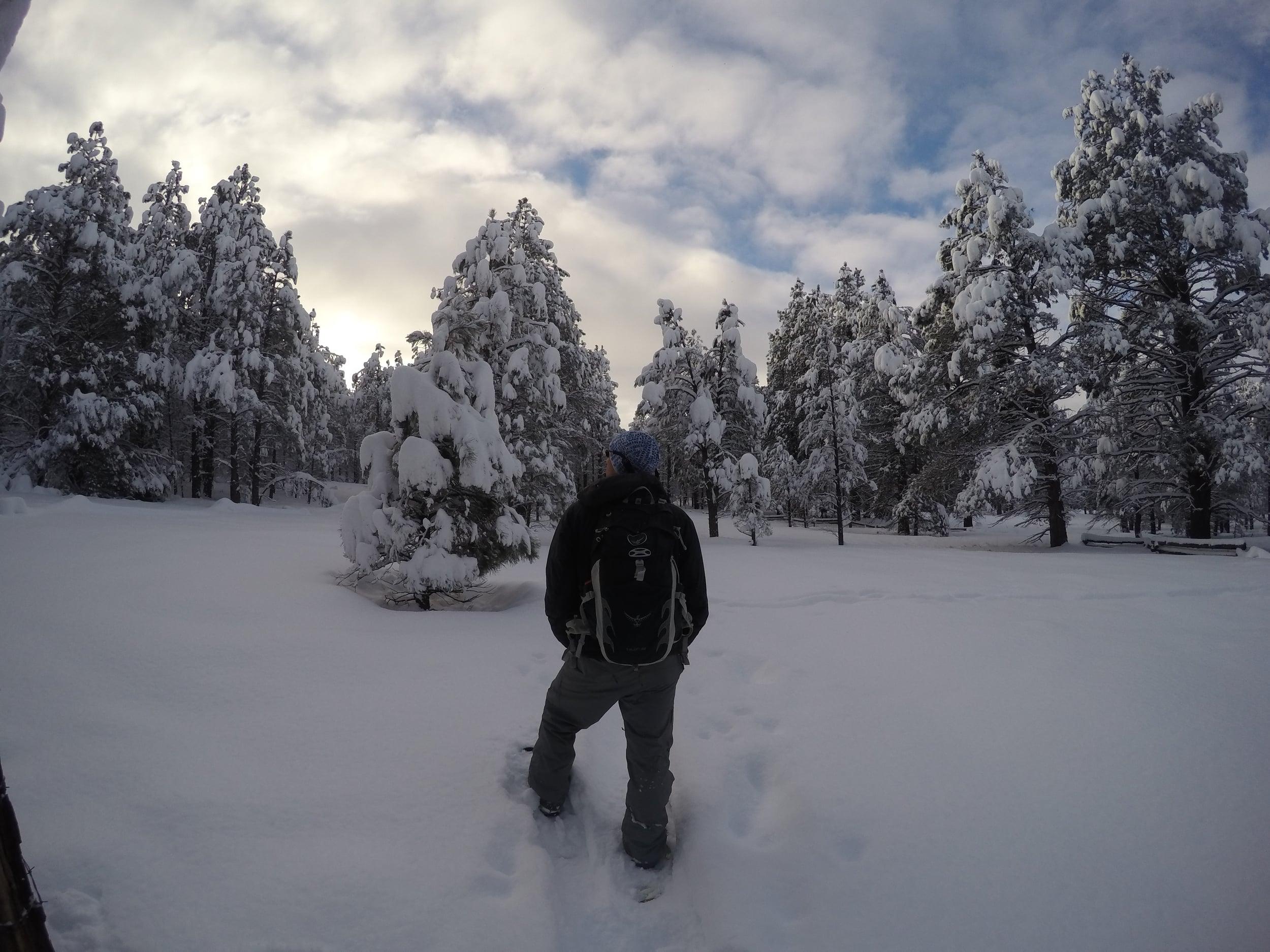MattyB cutting trail.