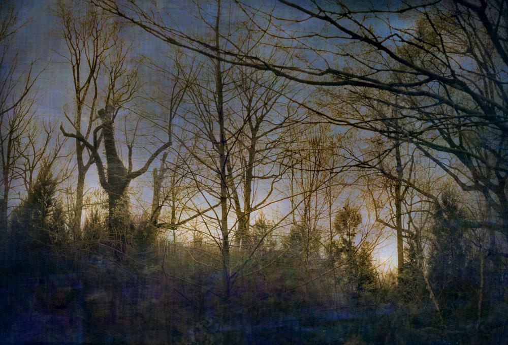 """""""Dark wood,"""" alternative process photo, 29 X 23 in., © 2017 Bill Travis"""