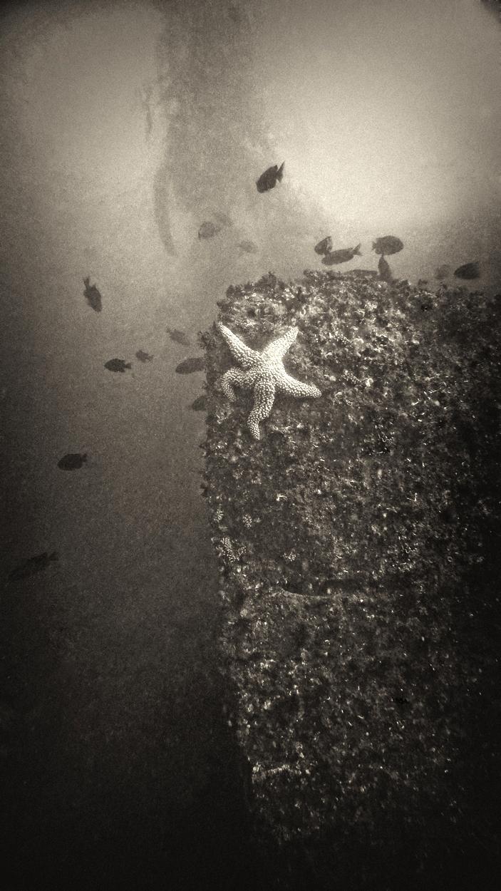 UW28 - Starfish, Breakwater