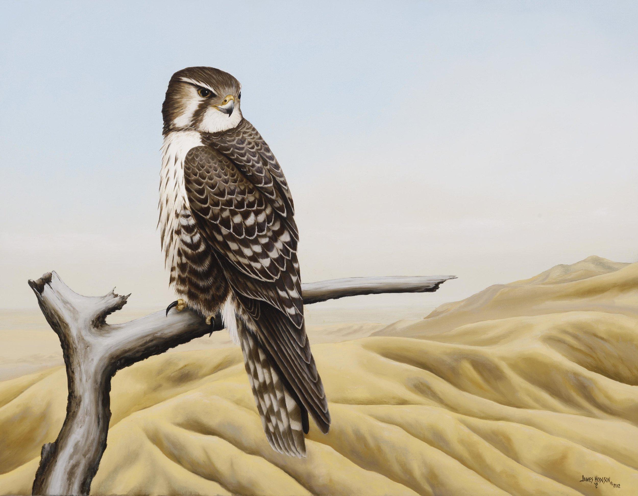 Jim Hodgson -  Prairie Falcon