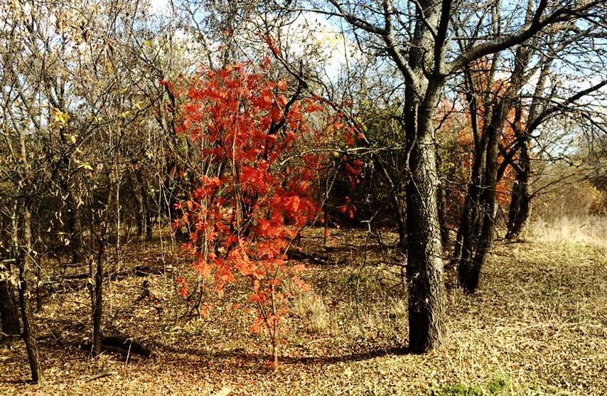 burning bush trail.jpg