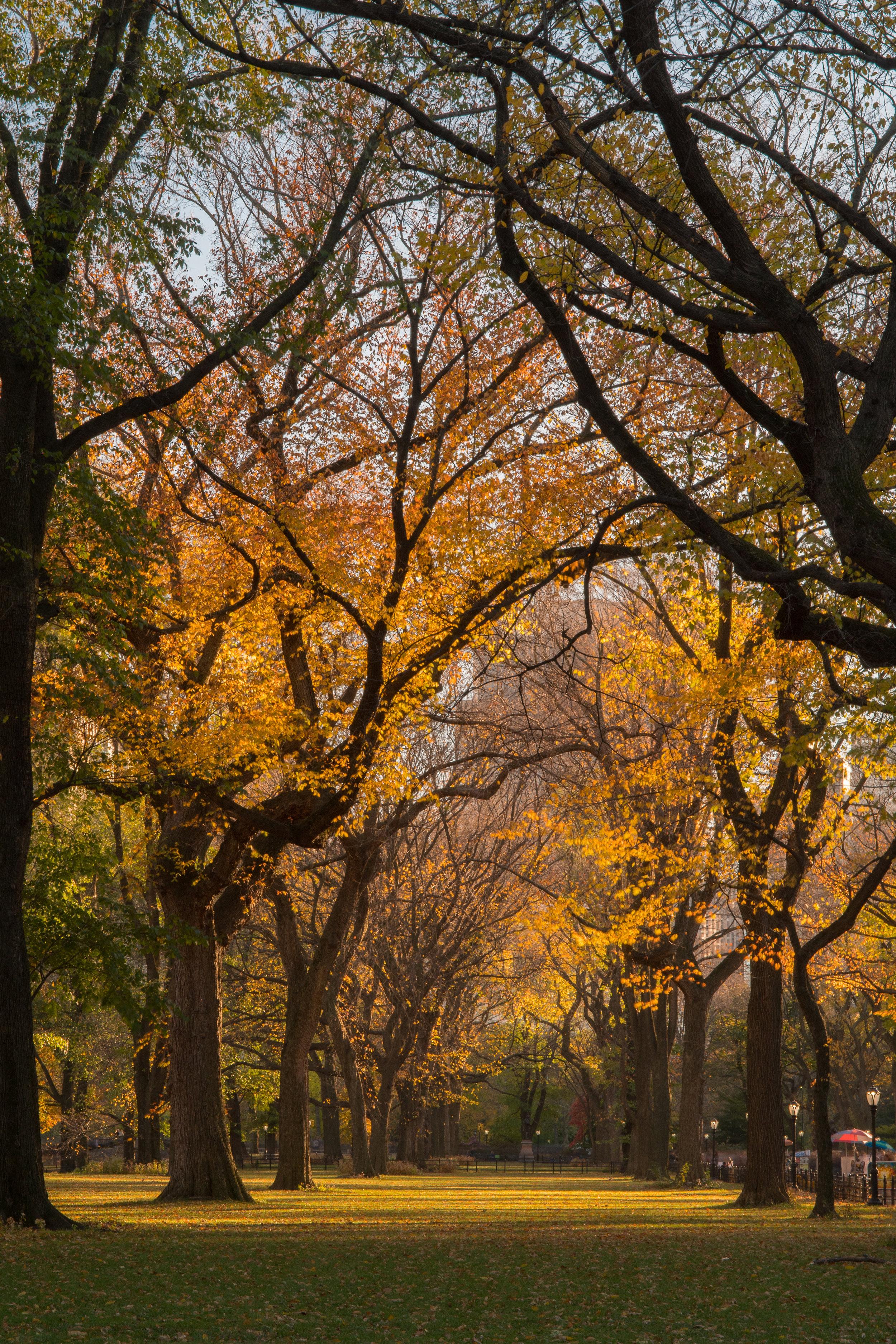 webCentral Park111316 029.jpg